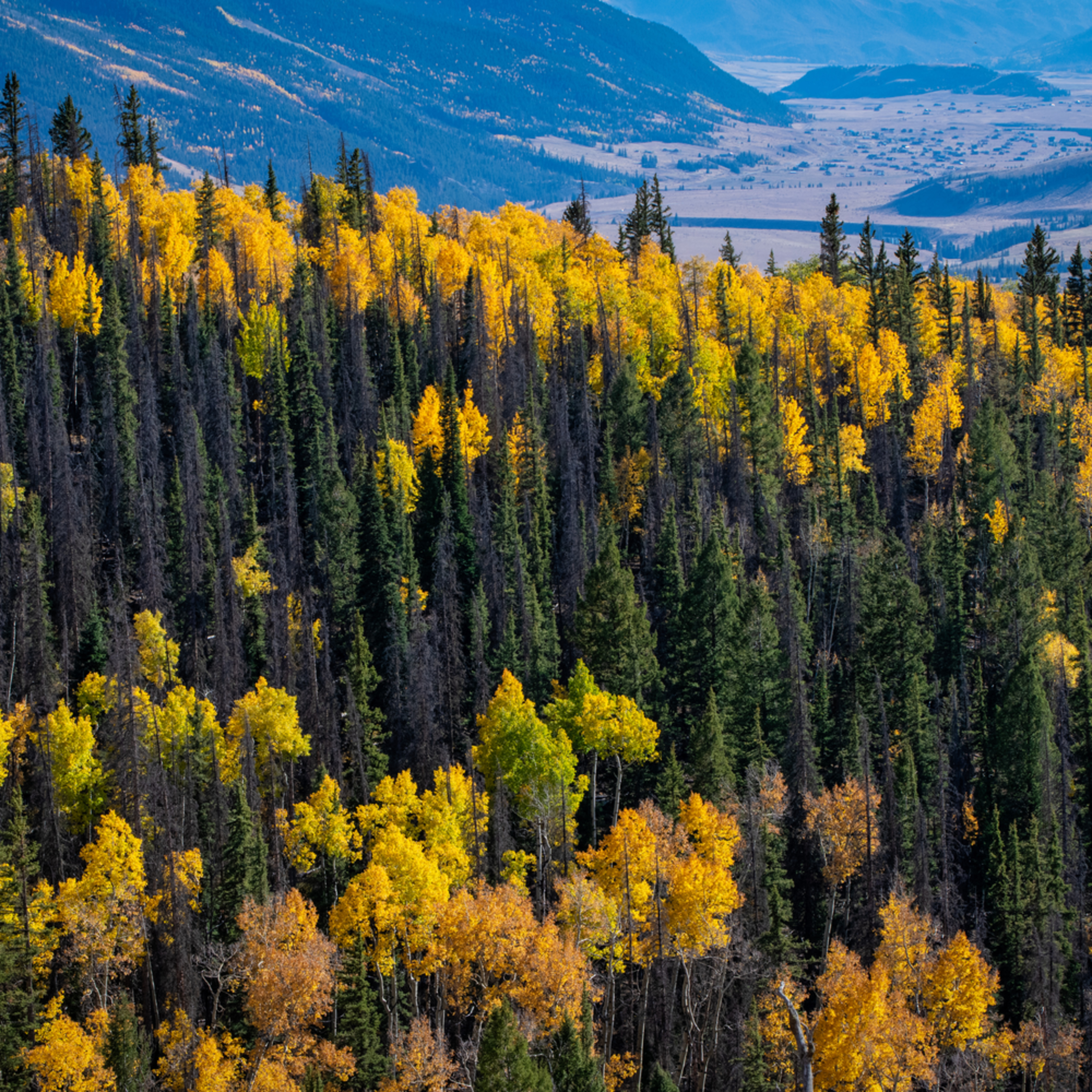 Andy crawford photography colorado aspens 3 zmgoge