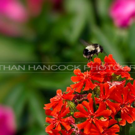 Botanical bee thumb bns09h