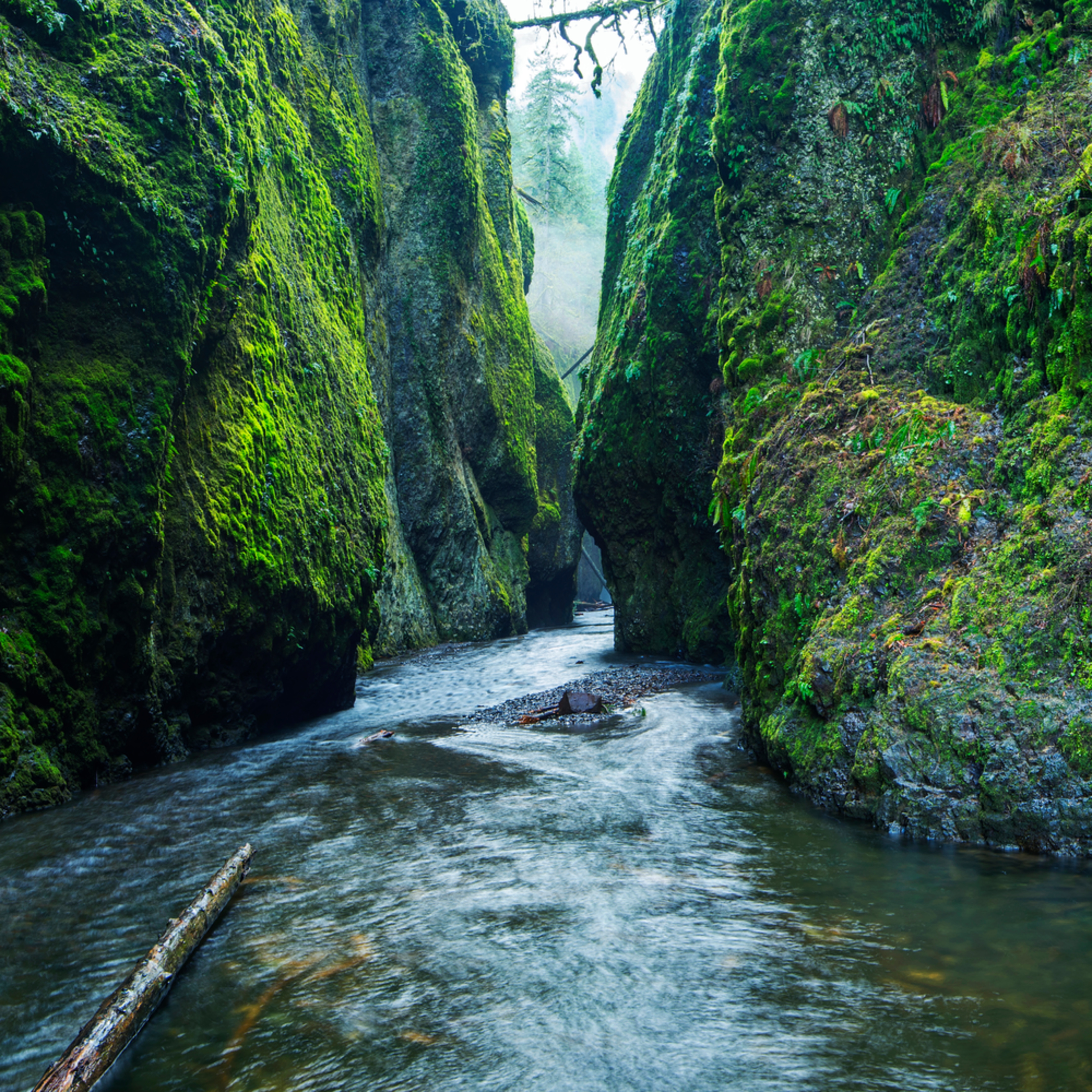 Oneonta gorge with log eyiqsa