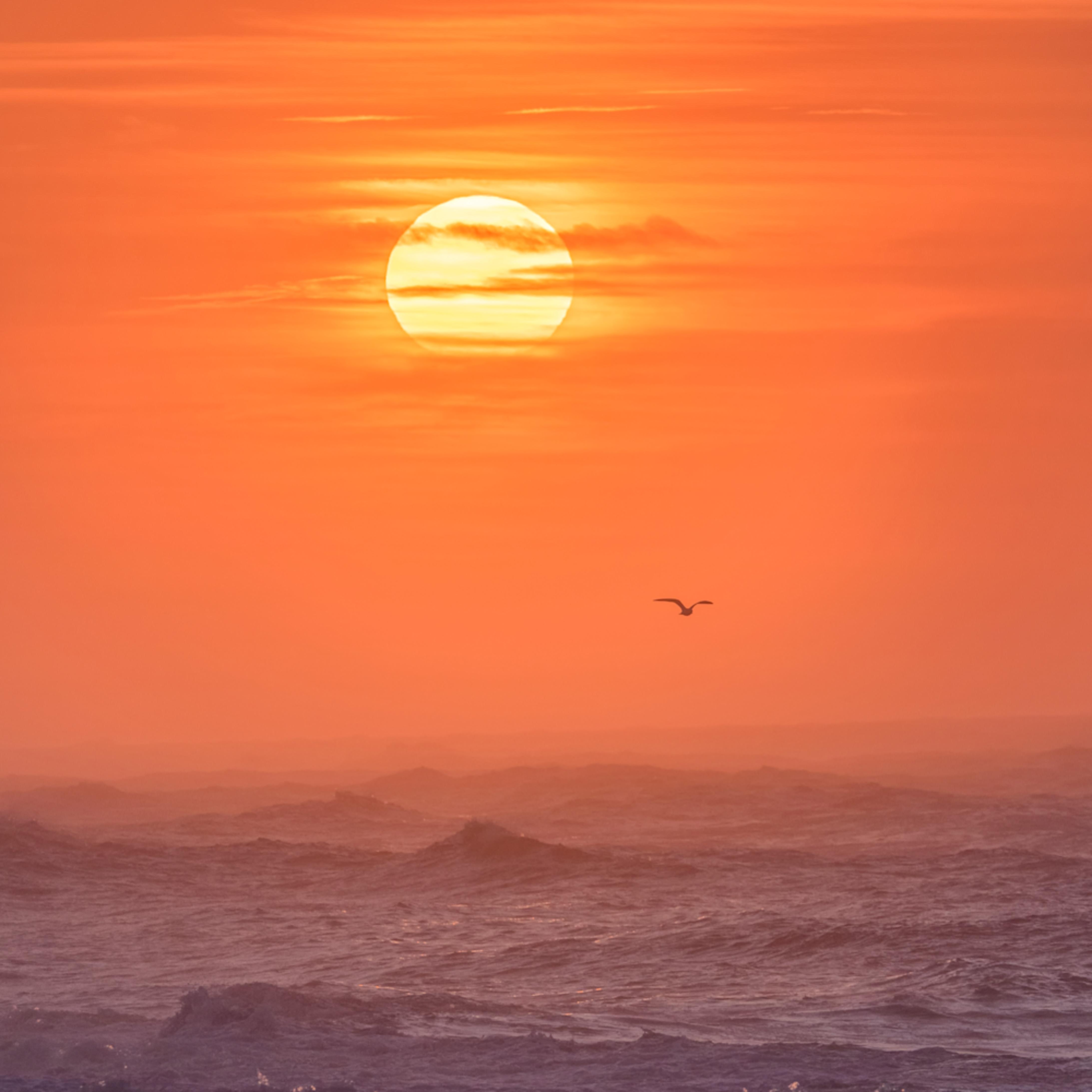 South beach winter solo gull 1 f0qxda