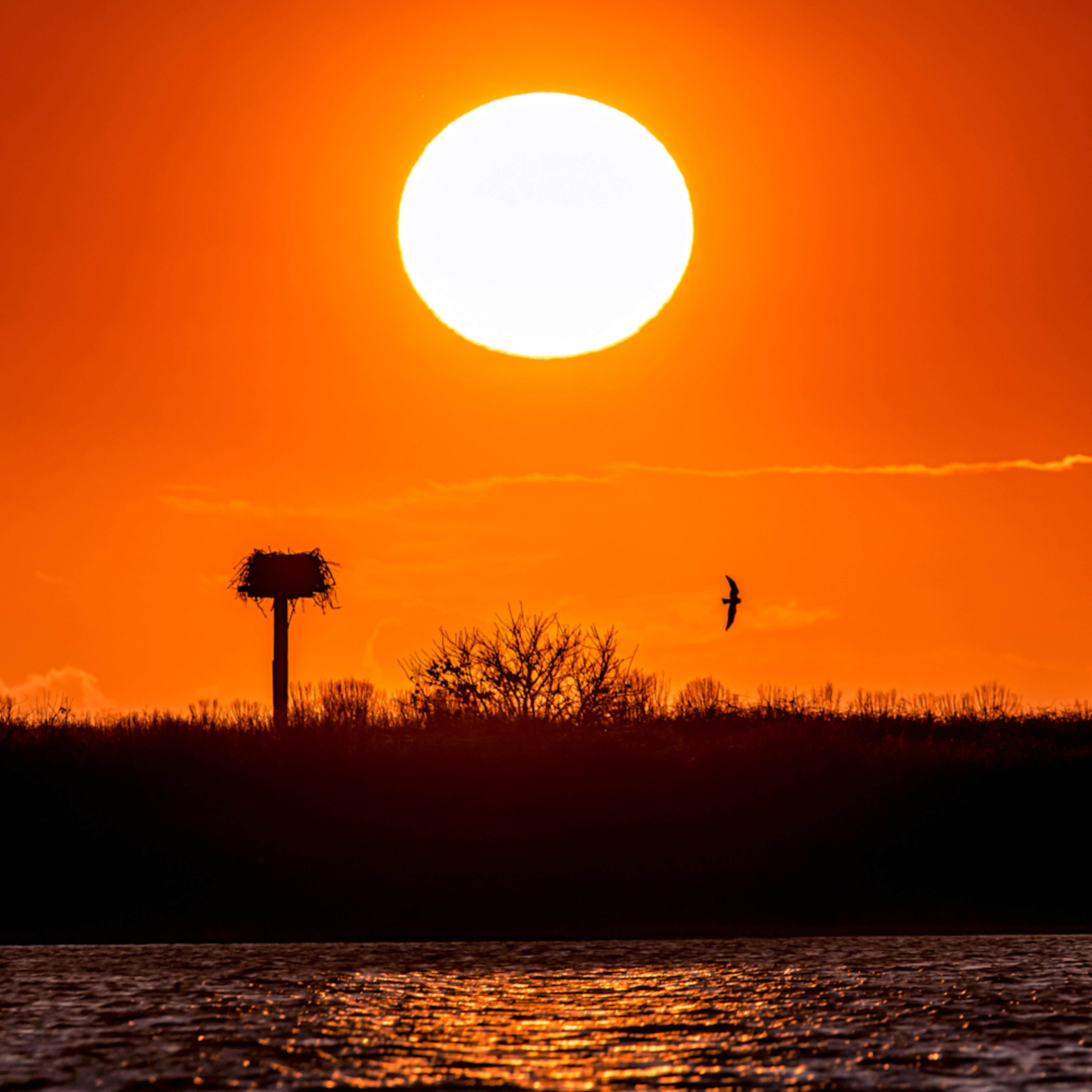 Chappy cape poge osprey setting sun nsxgjl