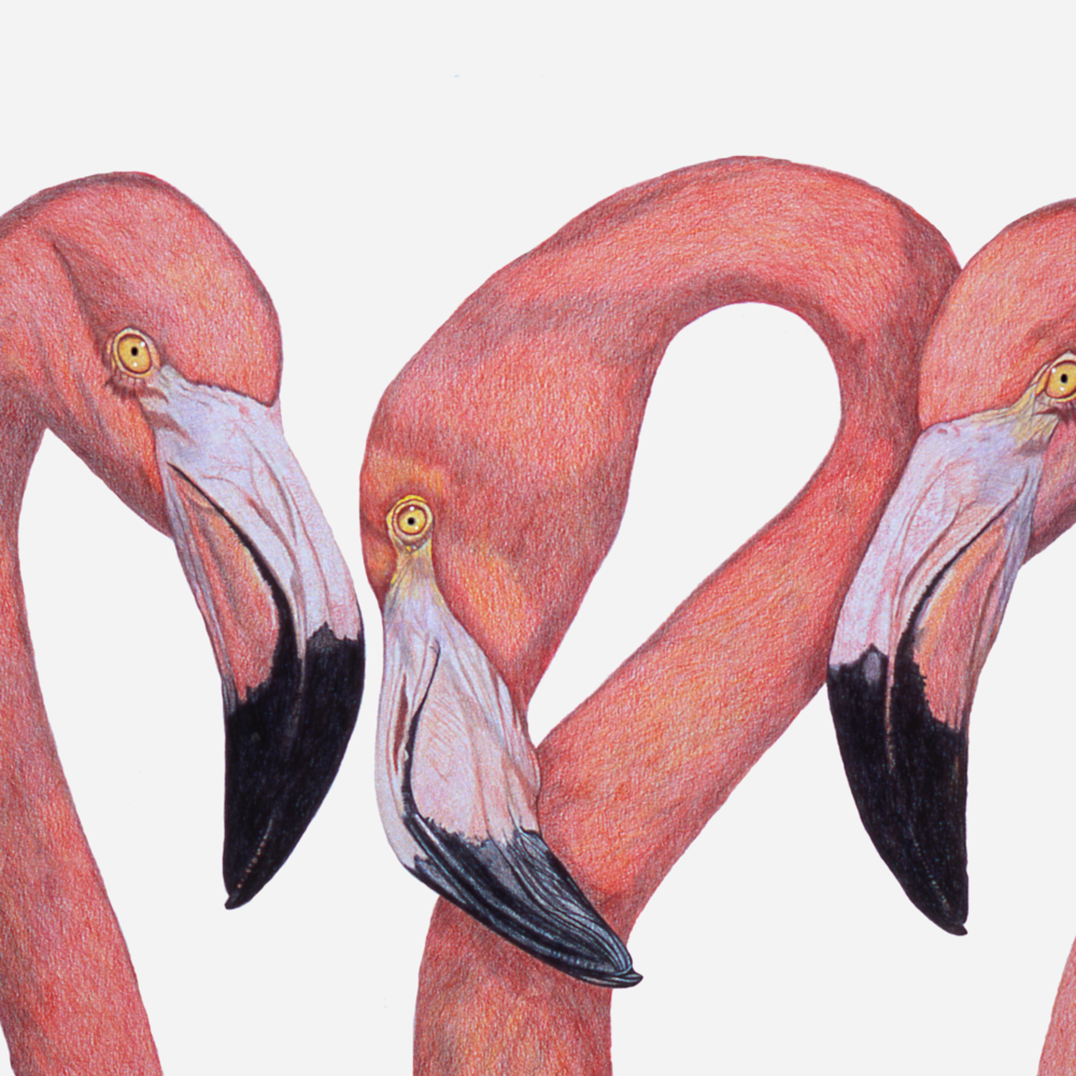 Dee van houten flamingo talk giclee 2020 czgaxw