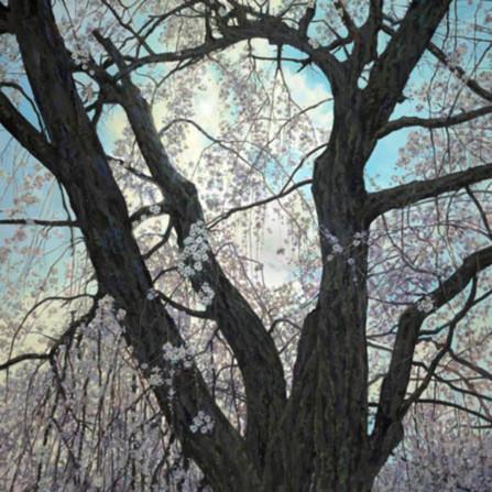 Under the cherry blossom tree baifjc