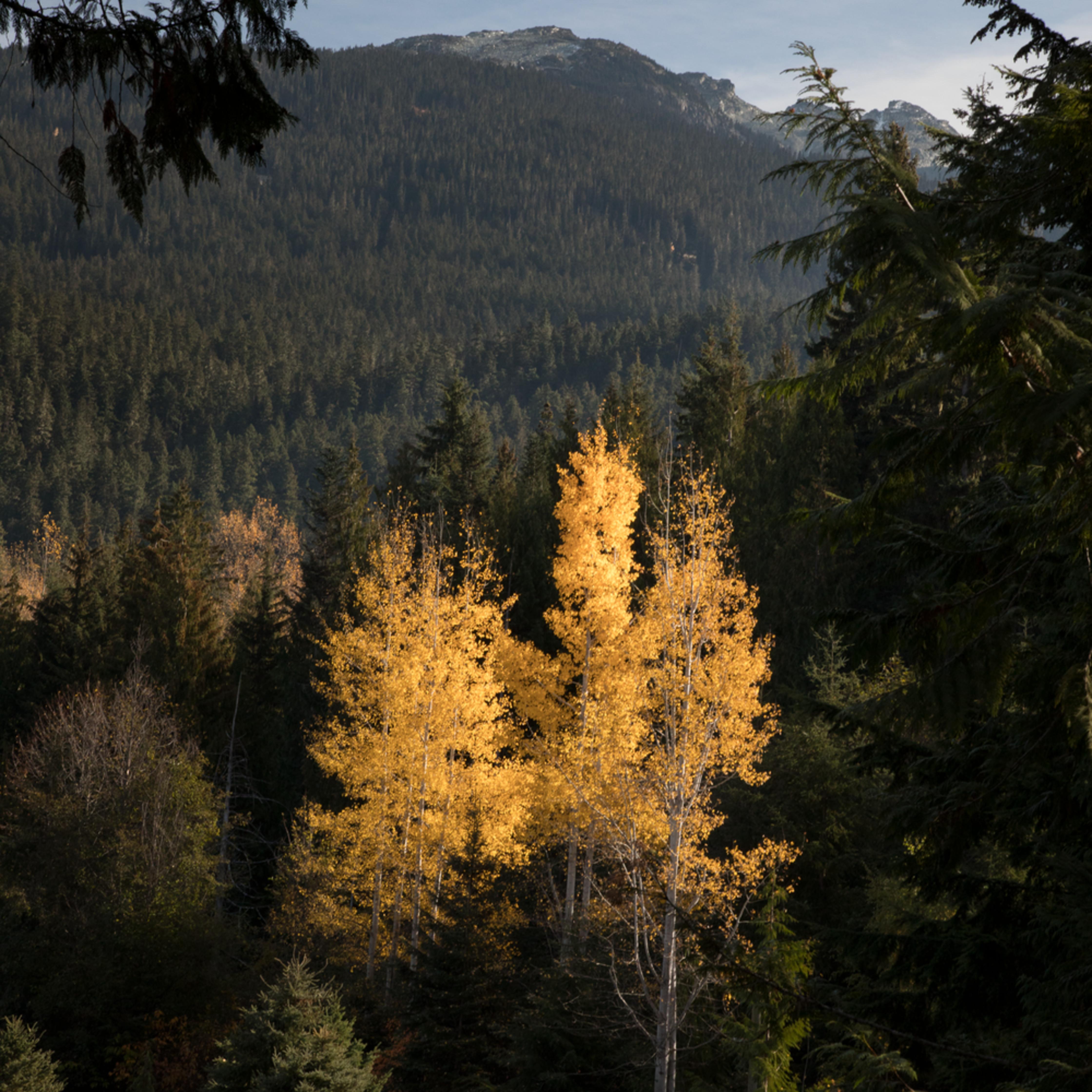 Whistler trees ecq2jx