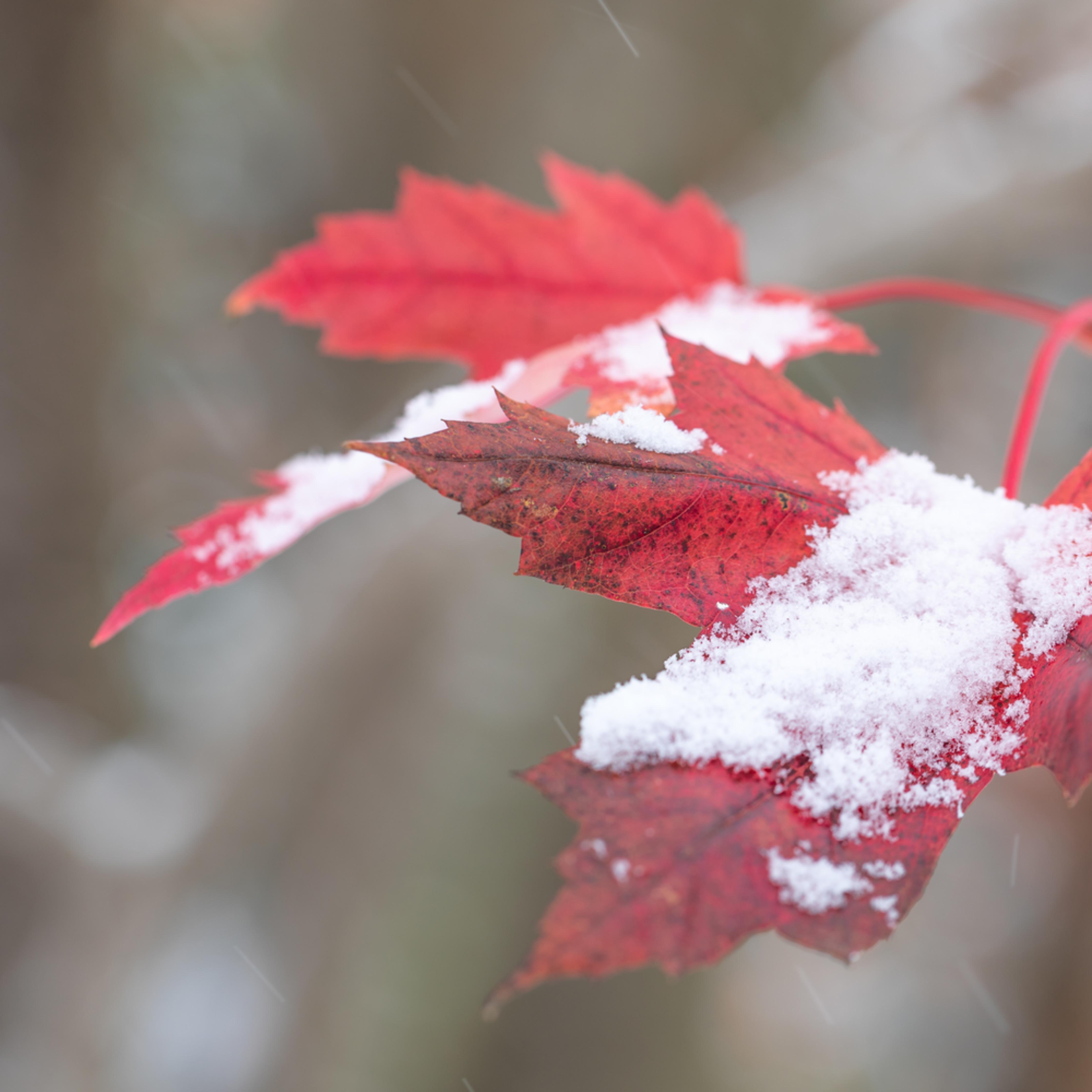 Late autumn snow e14956 lx7bwj