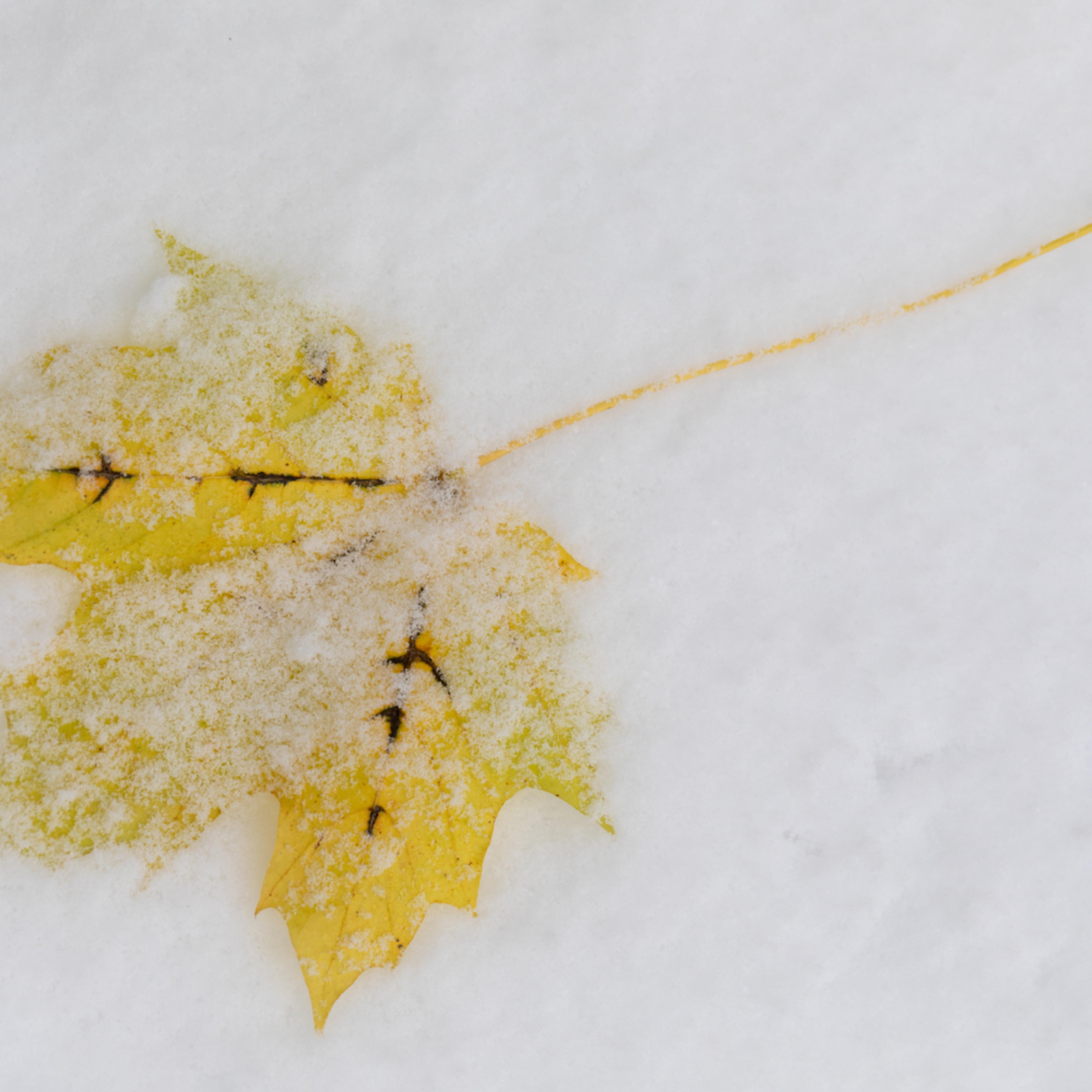 Snow leaf e15458 sxzytl