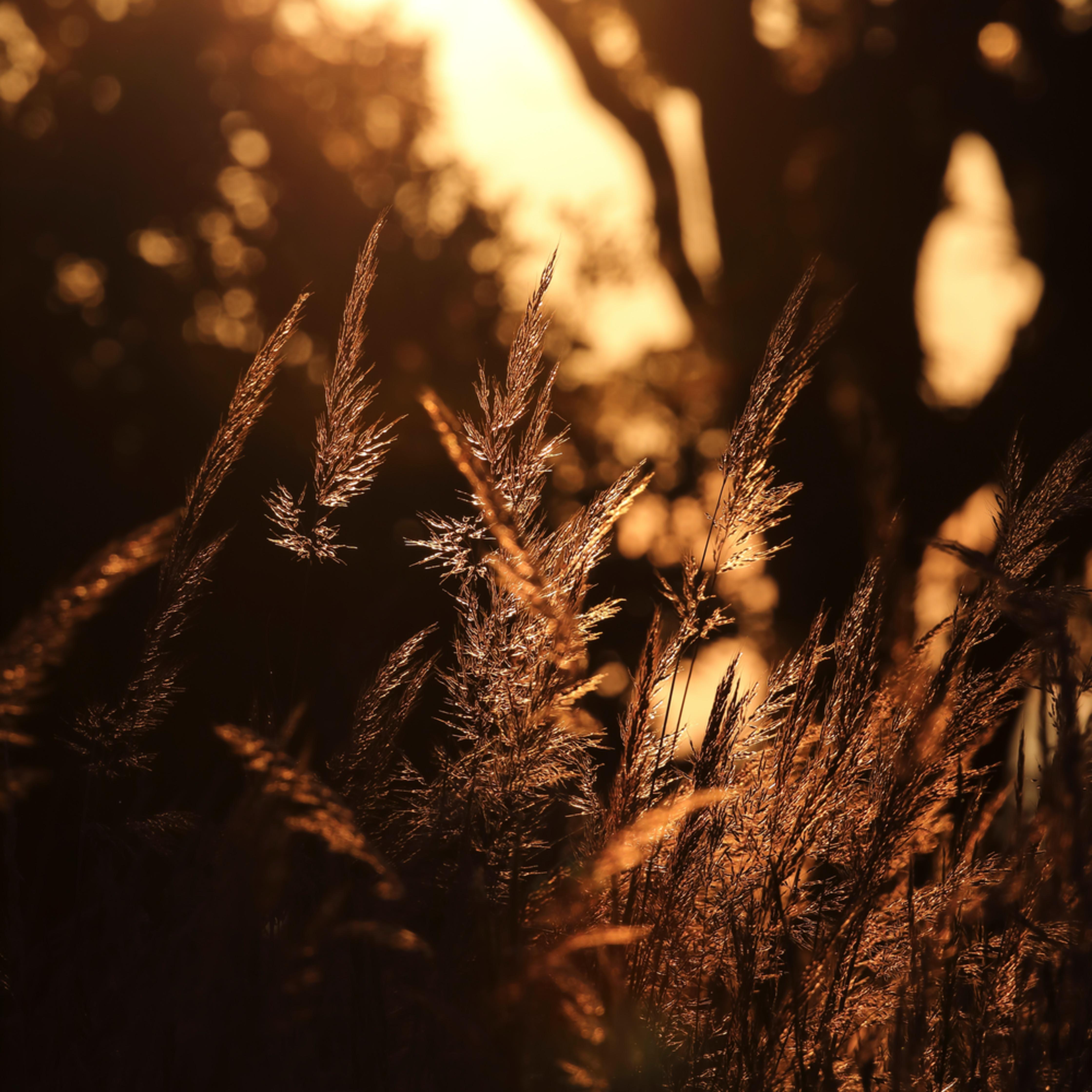 Prairie grass at sunrise xwbbew