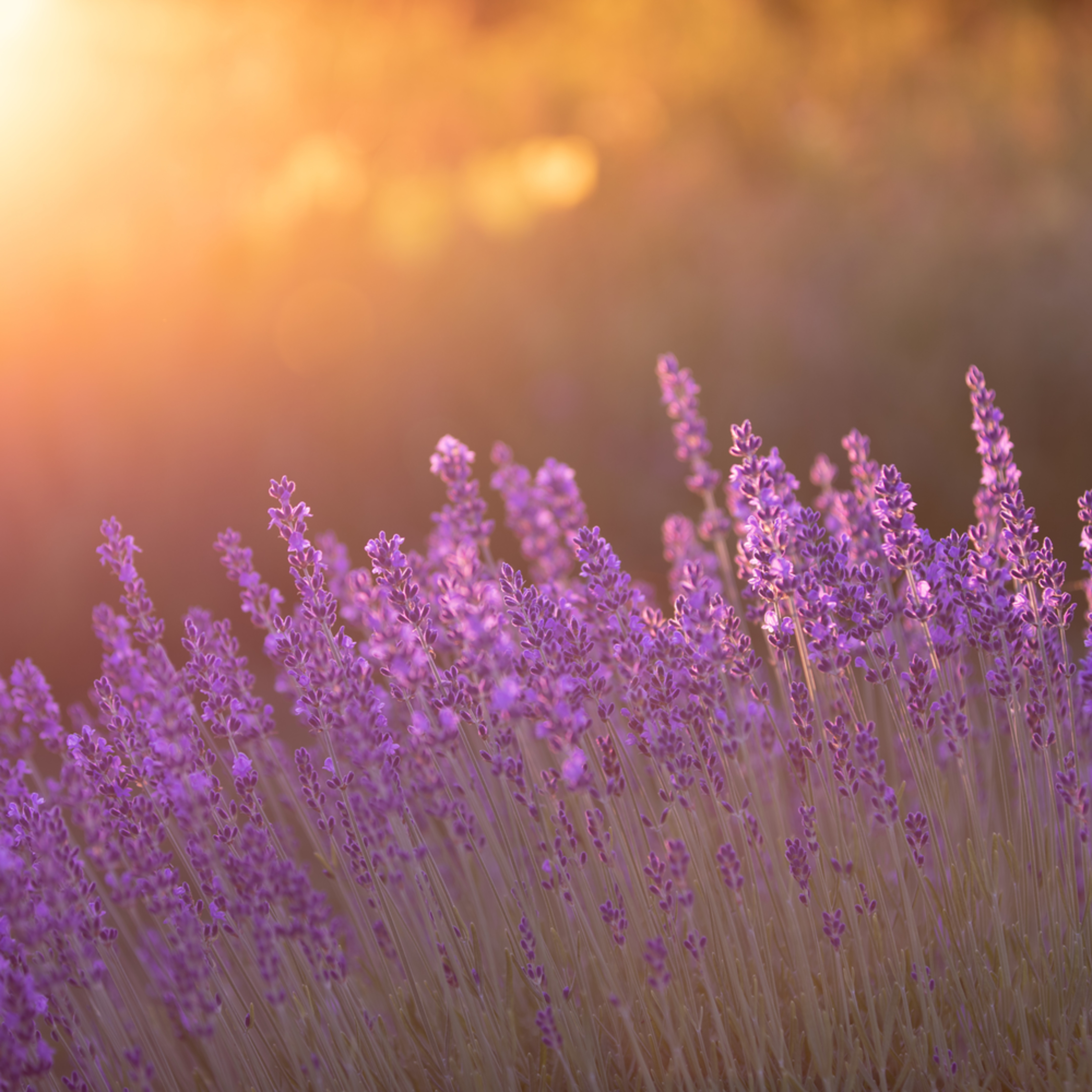 Sunset aroma vgmdyc