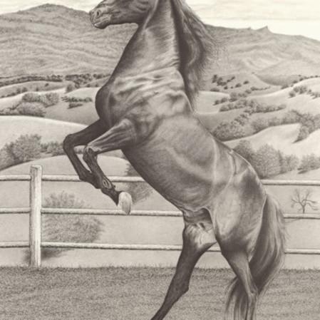 Horse rearing hybh9r
