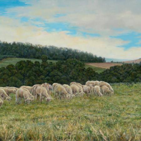 Tuscan sheep biuxxd