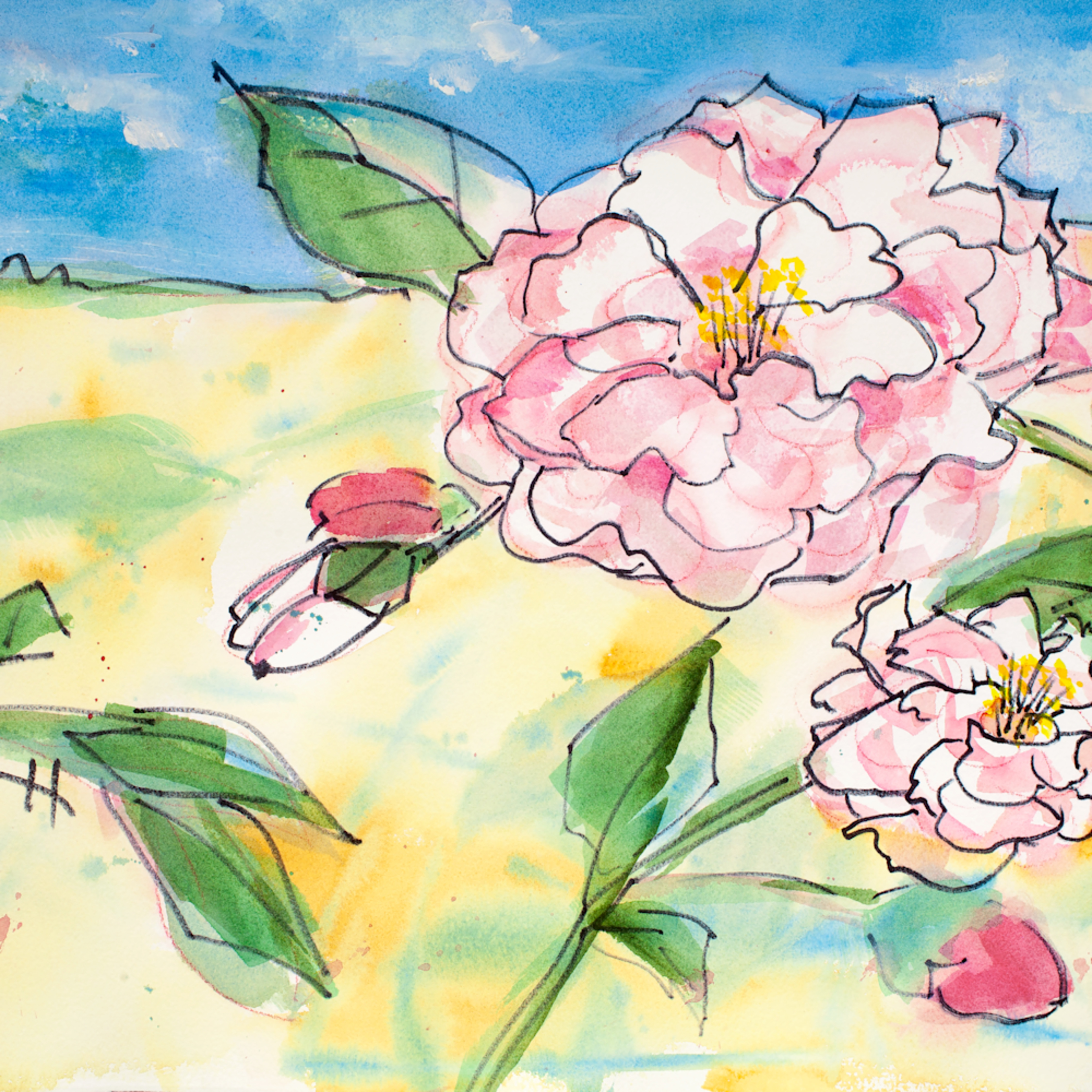 Sweet pinks ddlvpa