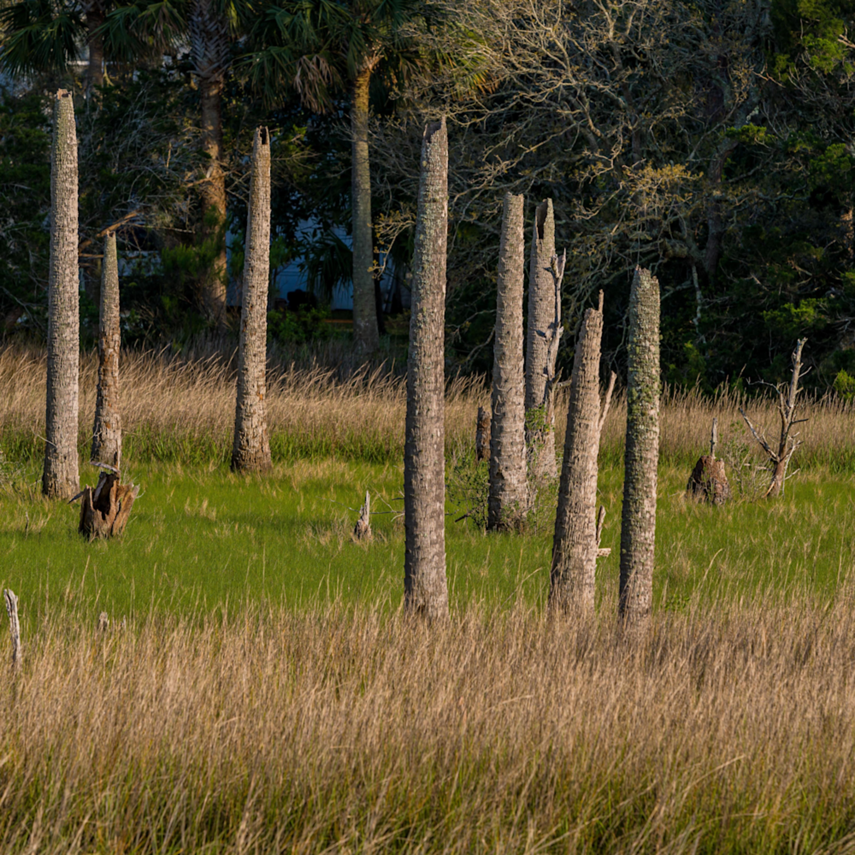 Castaway island preserve 2615 v8nhl2