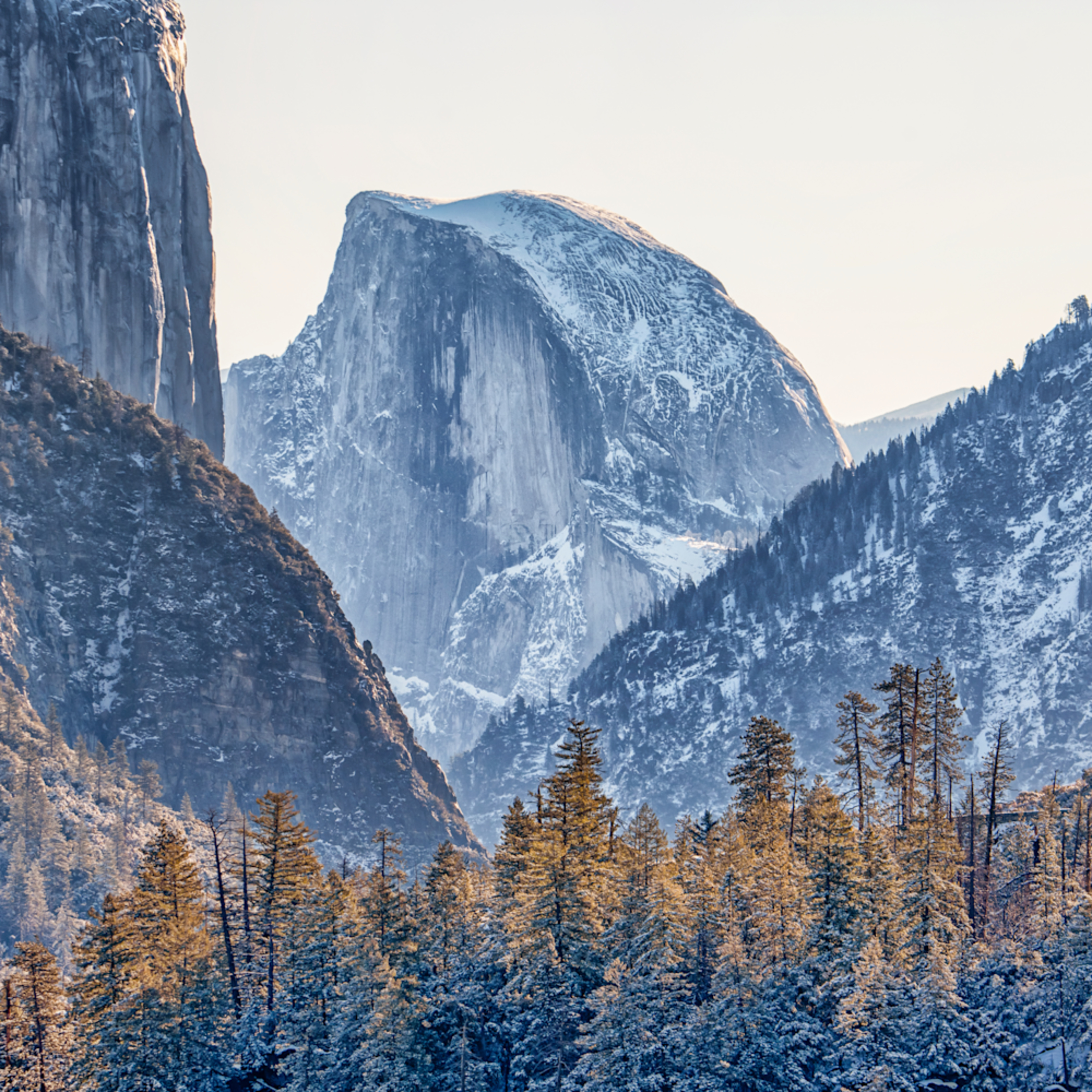 Ysemite half dome forest a1v7lp