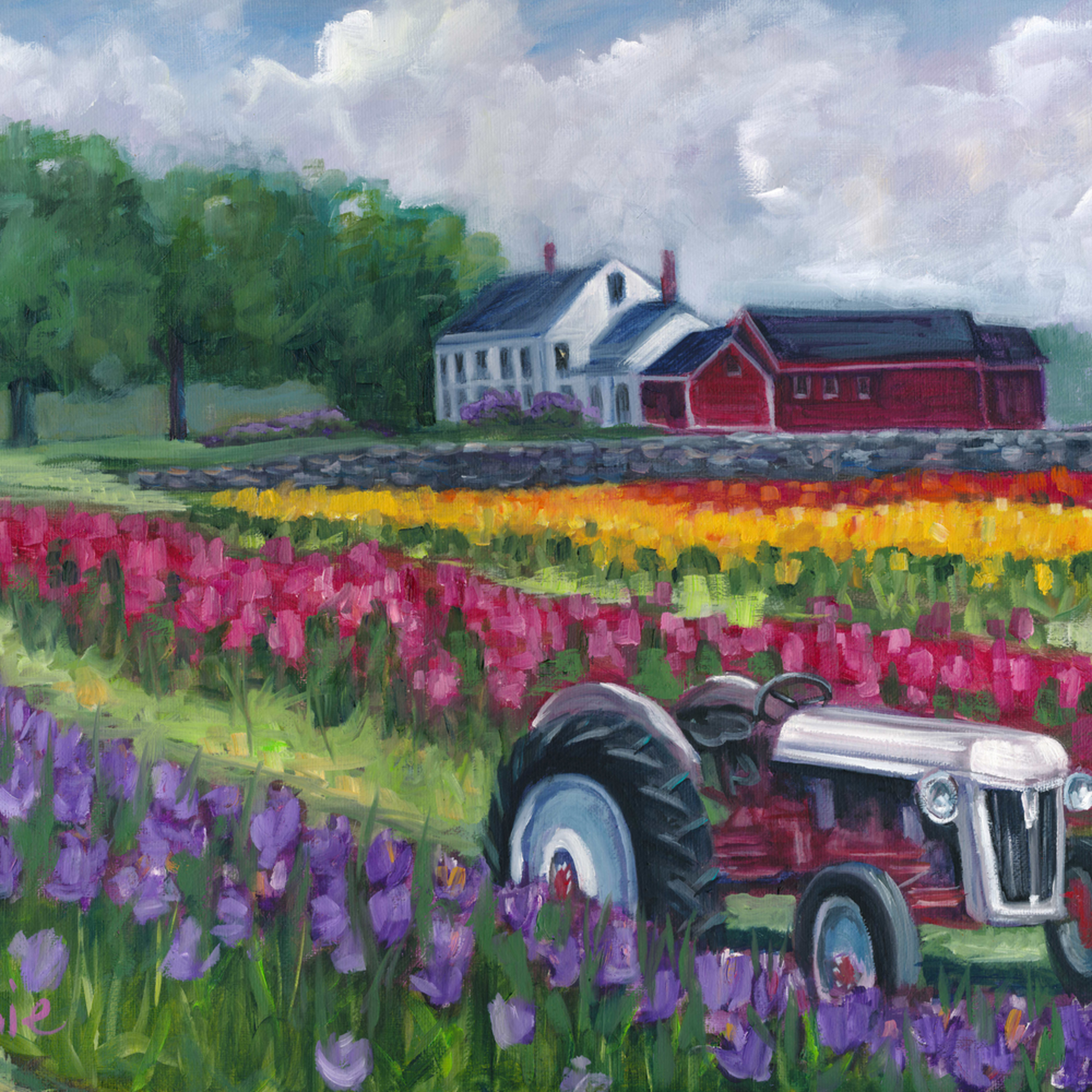 Tractoring through the tulips be8bzt