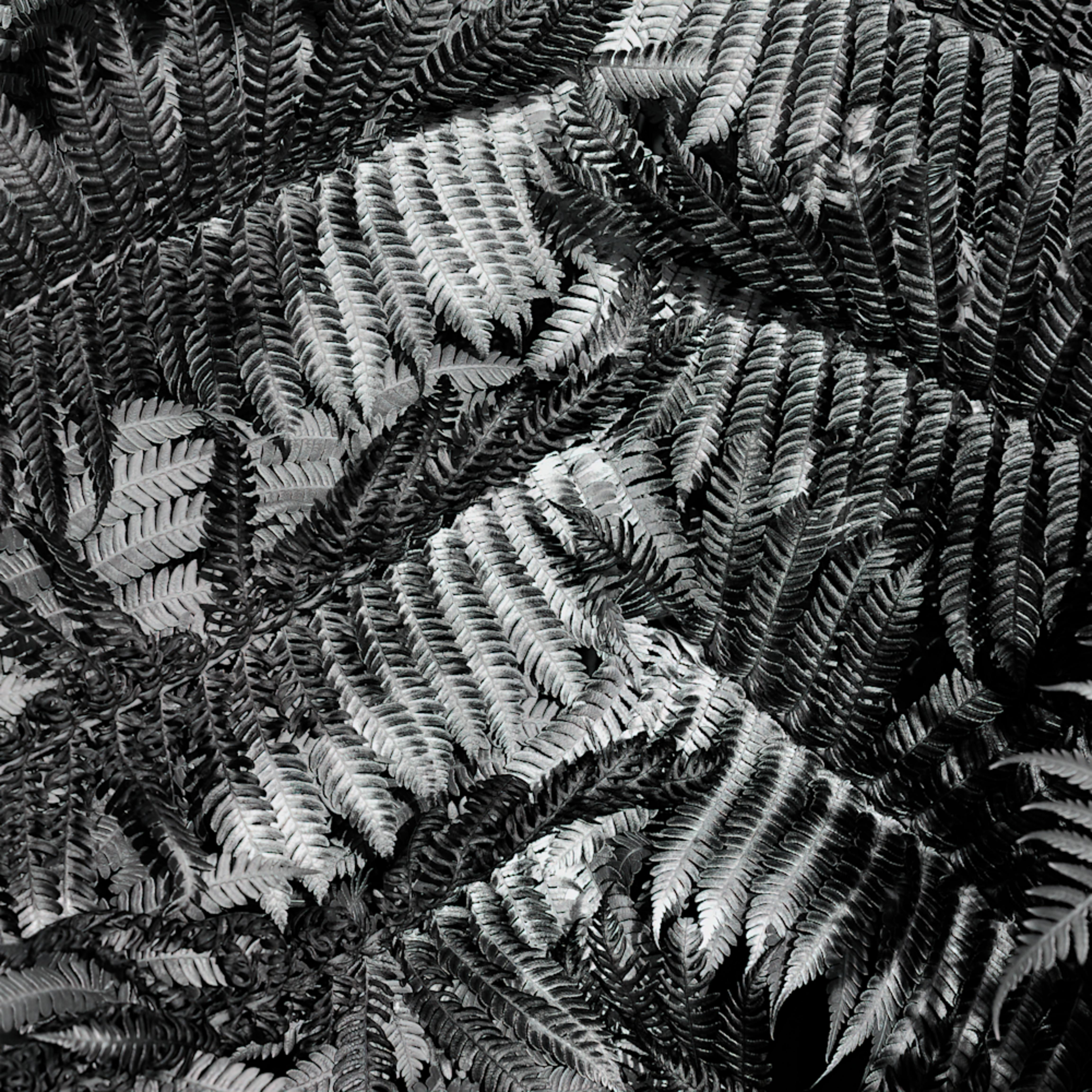 Patchwork fern rj53tp