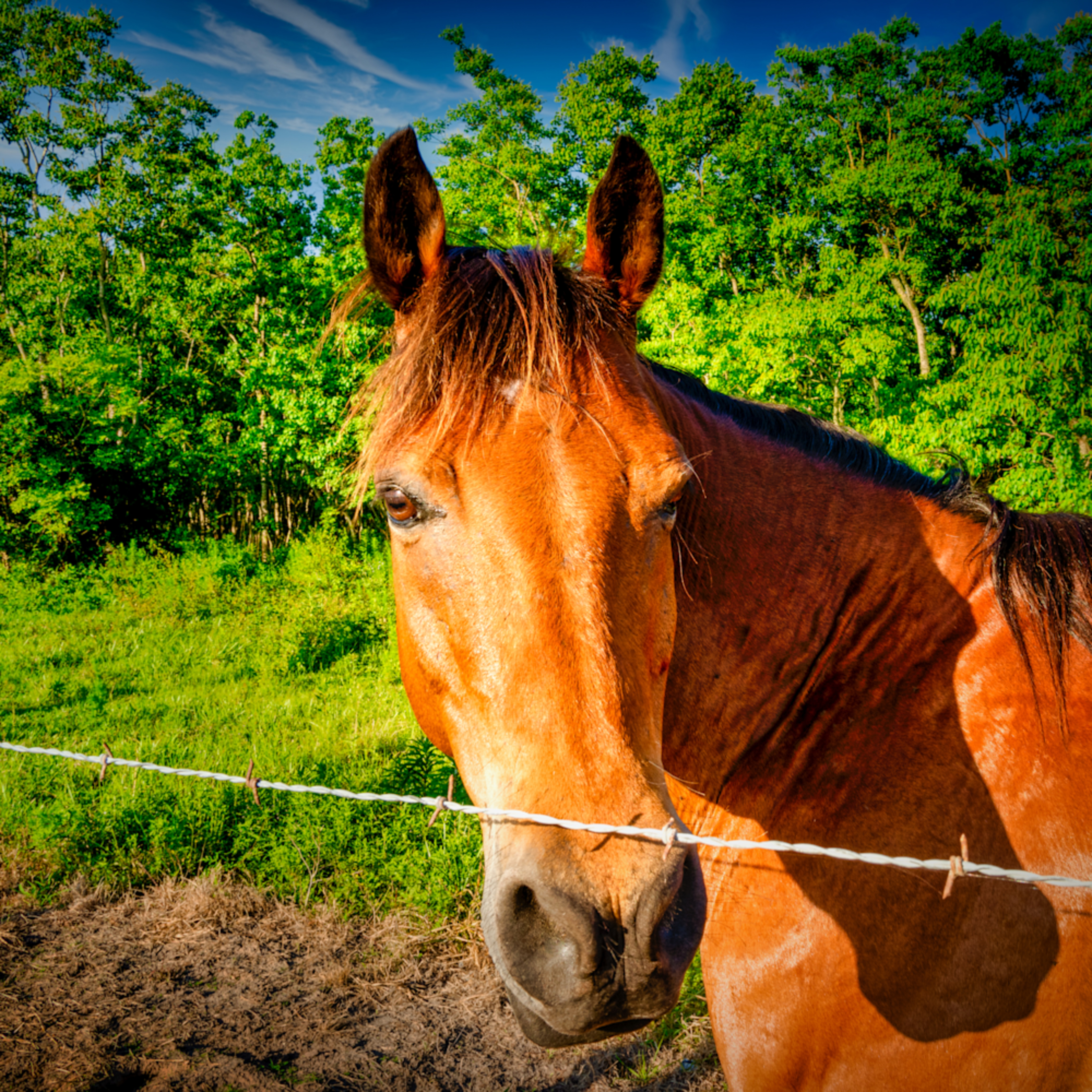 Horse in pasture y4rzsk