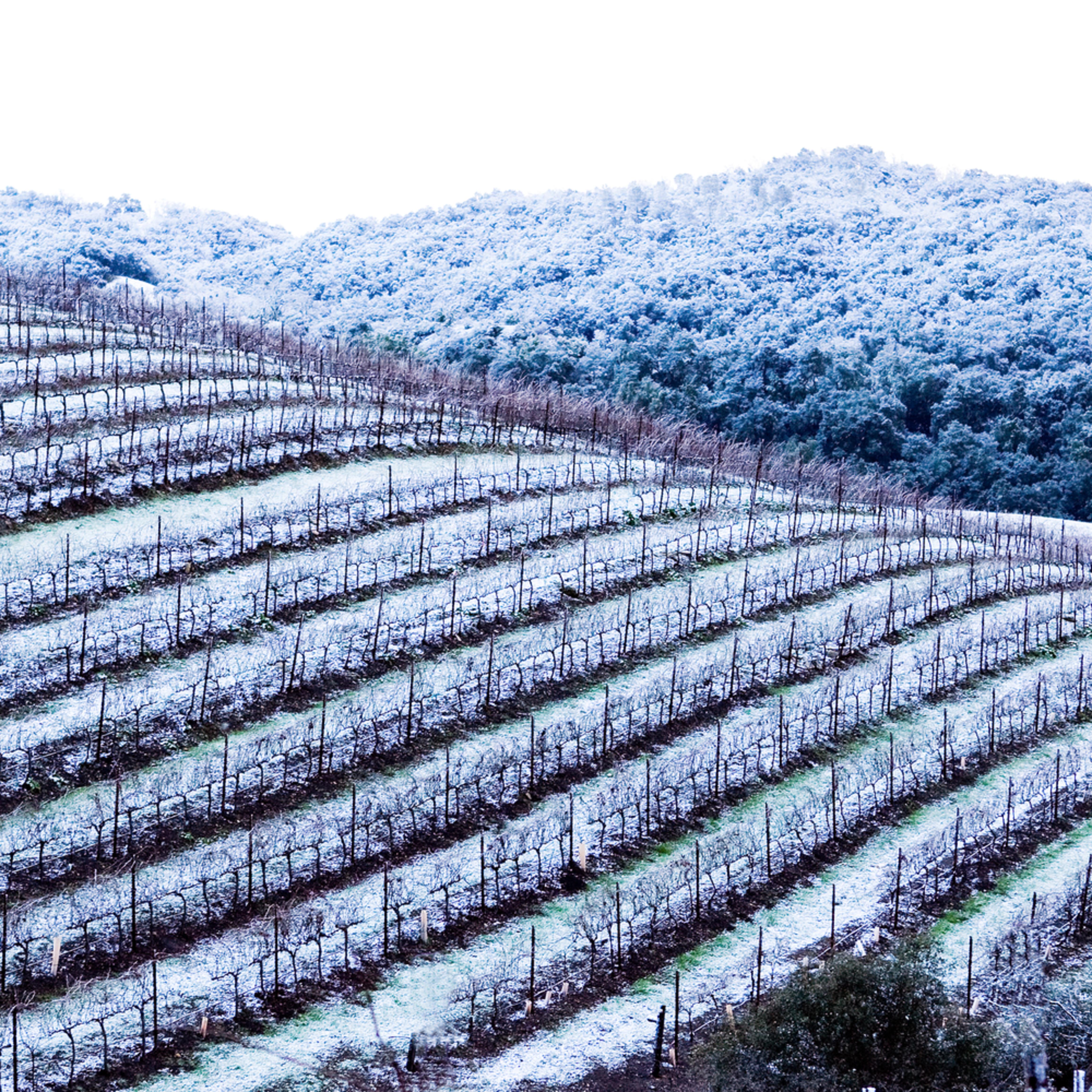 Snowy vineyard g3banl