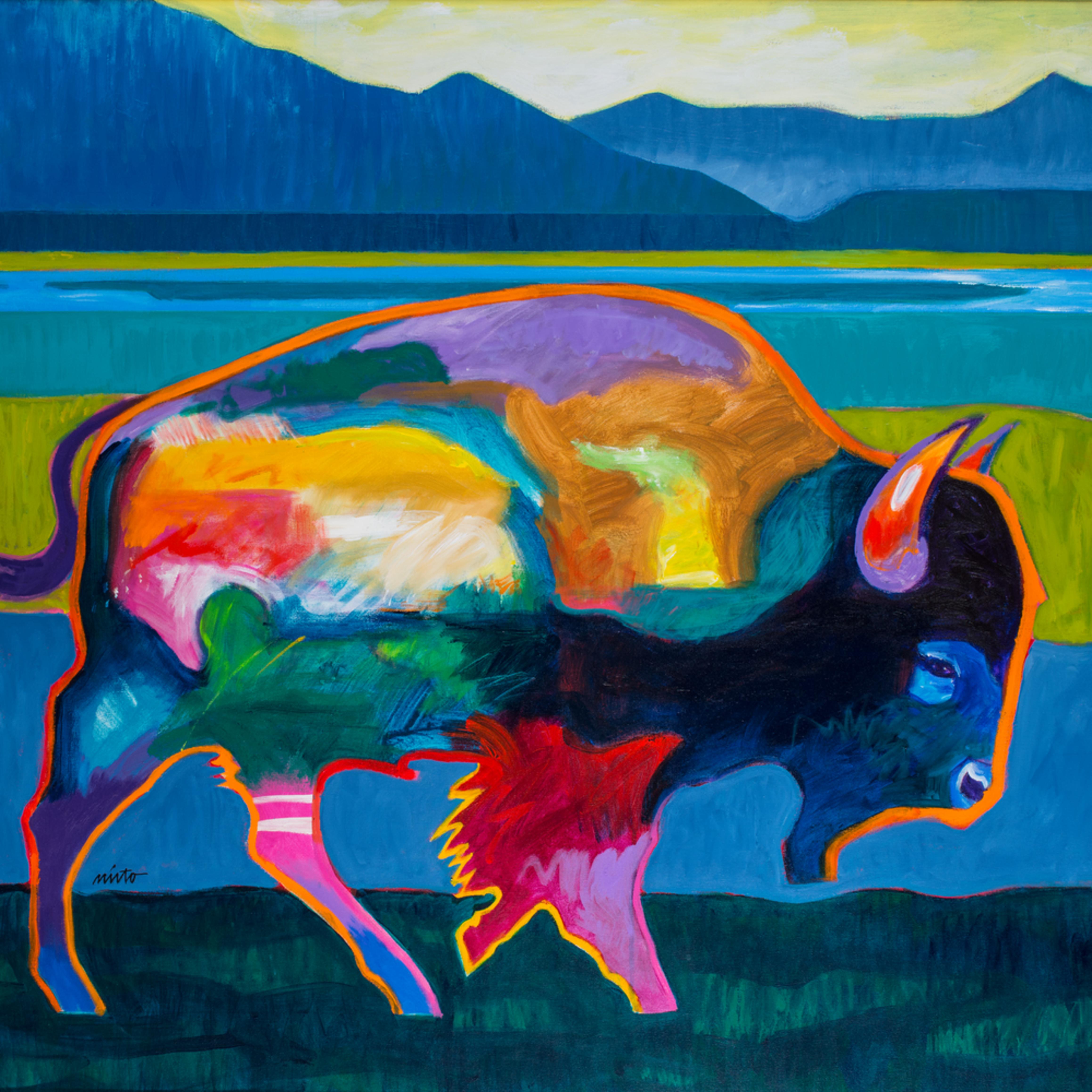 Buffalo in foothills nf7gkk