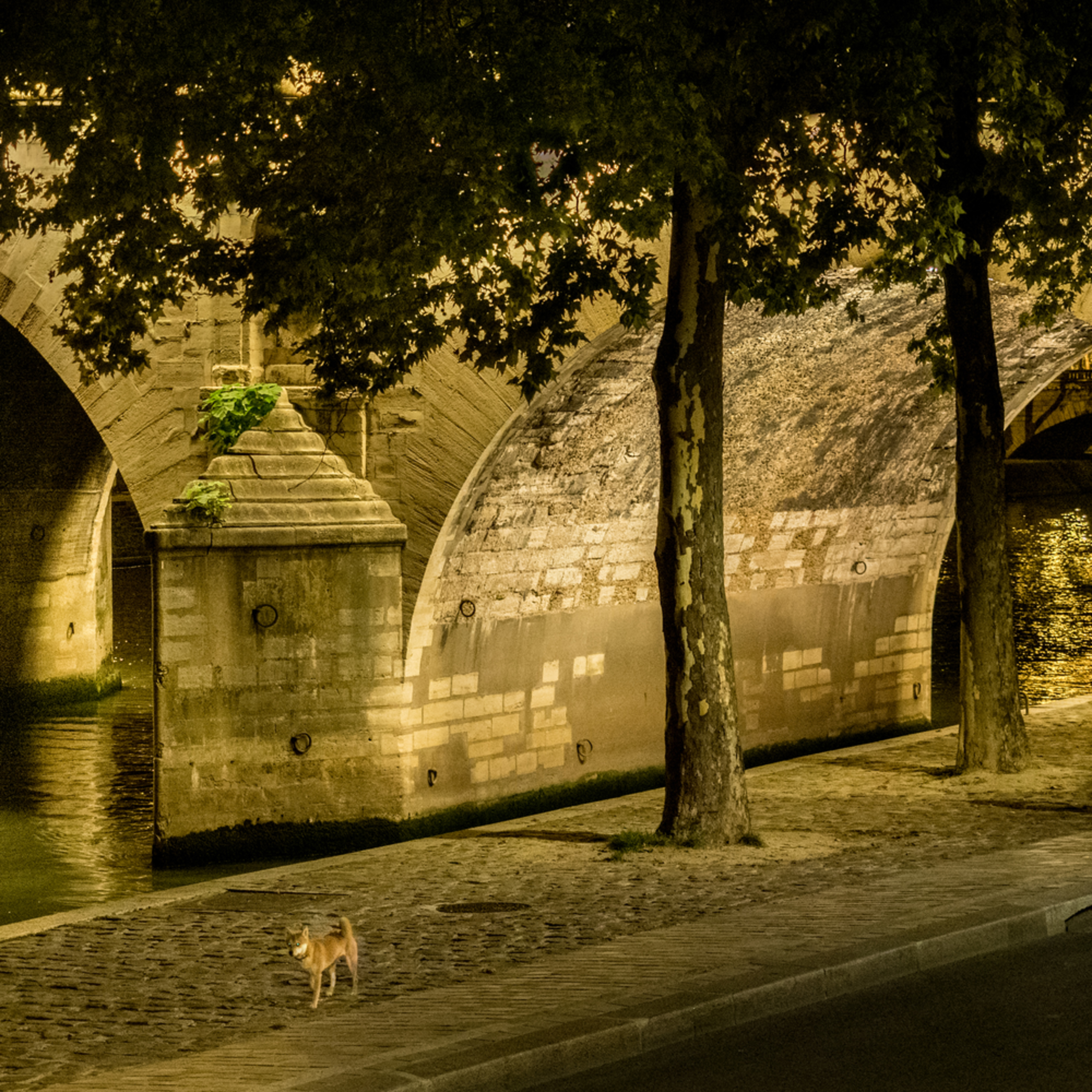 Paris 9 17 055 ifgmle