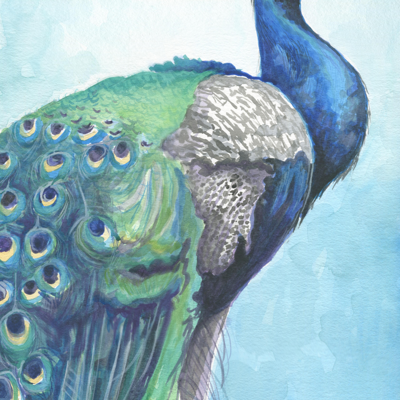 Peacock 2 aliz7o