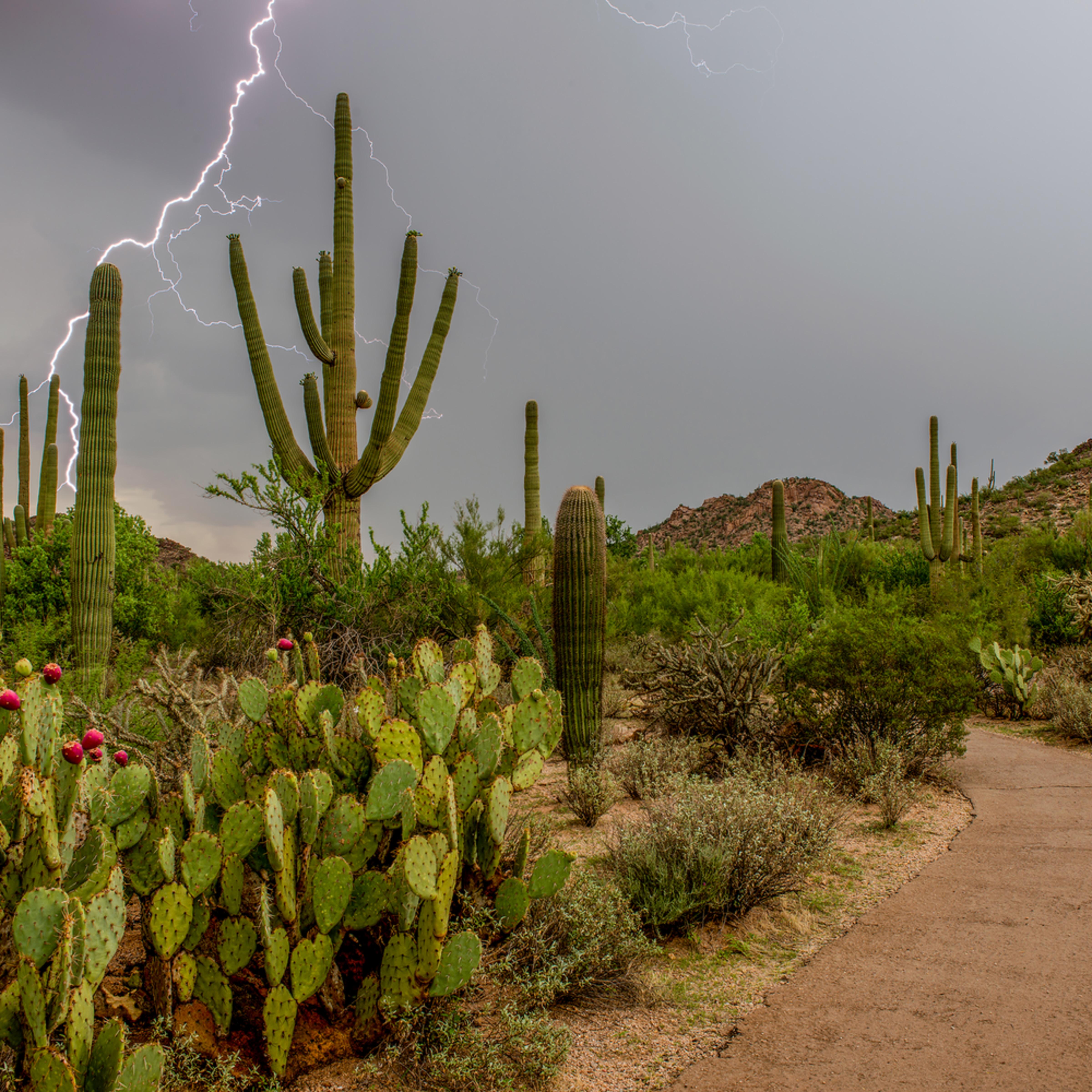 Dp407 monsoon lightning k1jhmx
