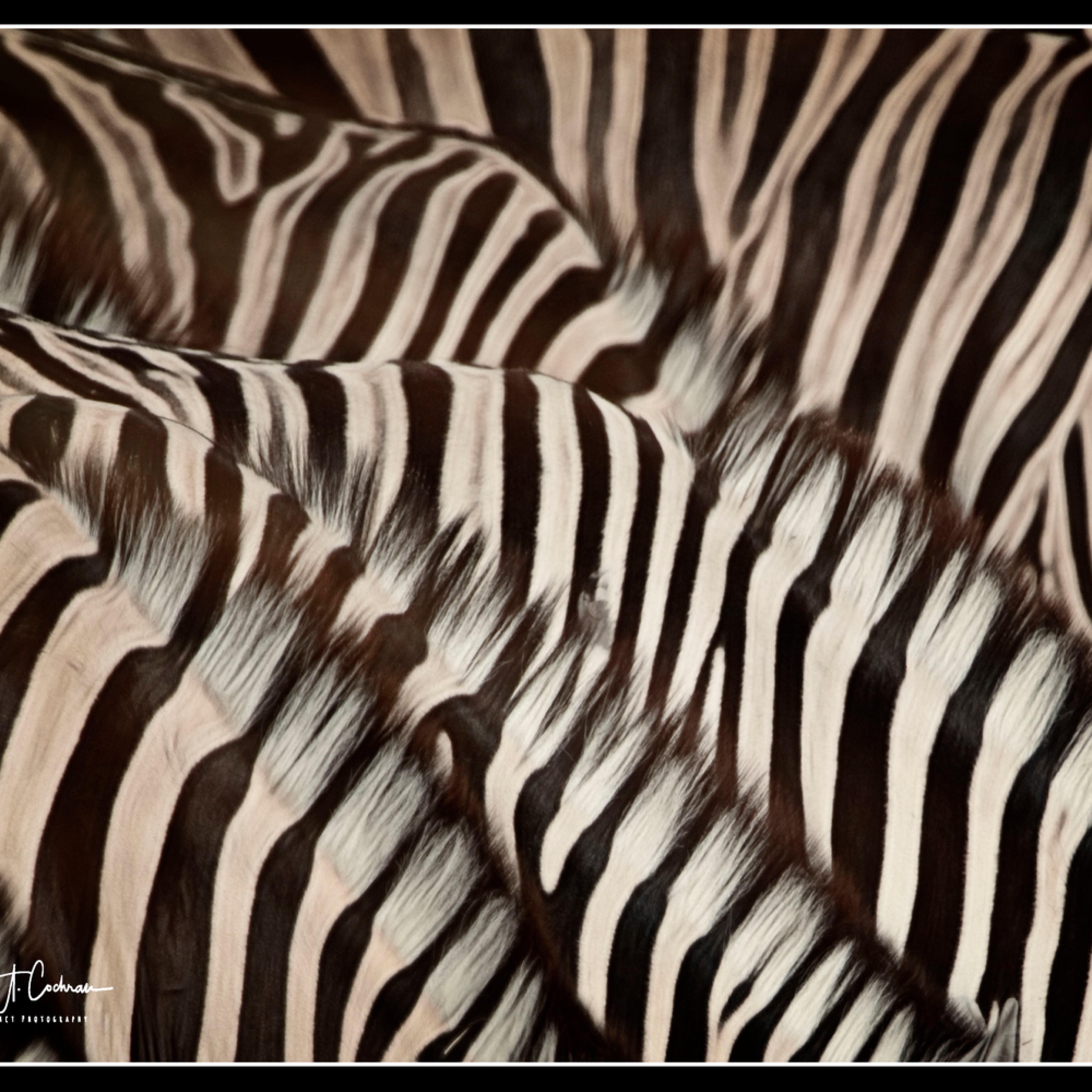 Lonely stripes hvssxj