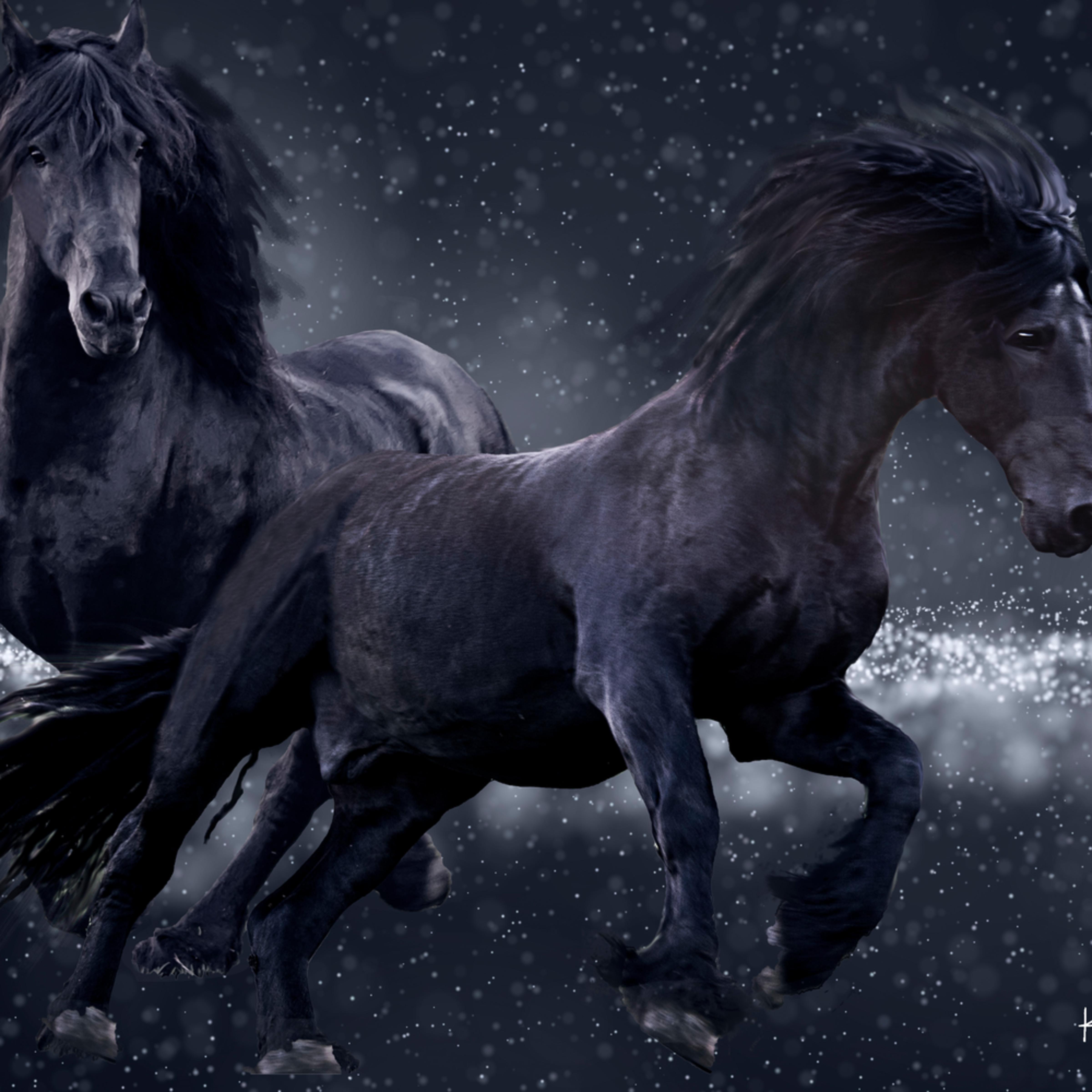 Midnight fresian race zdgwpc