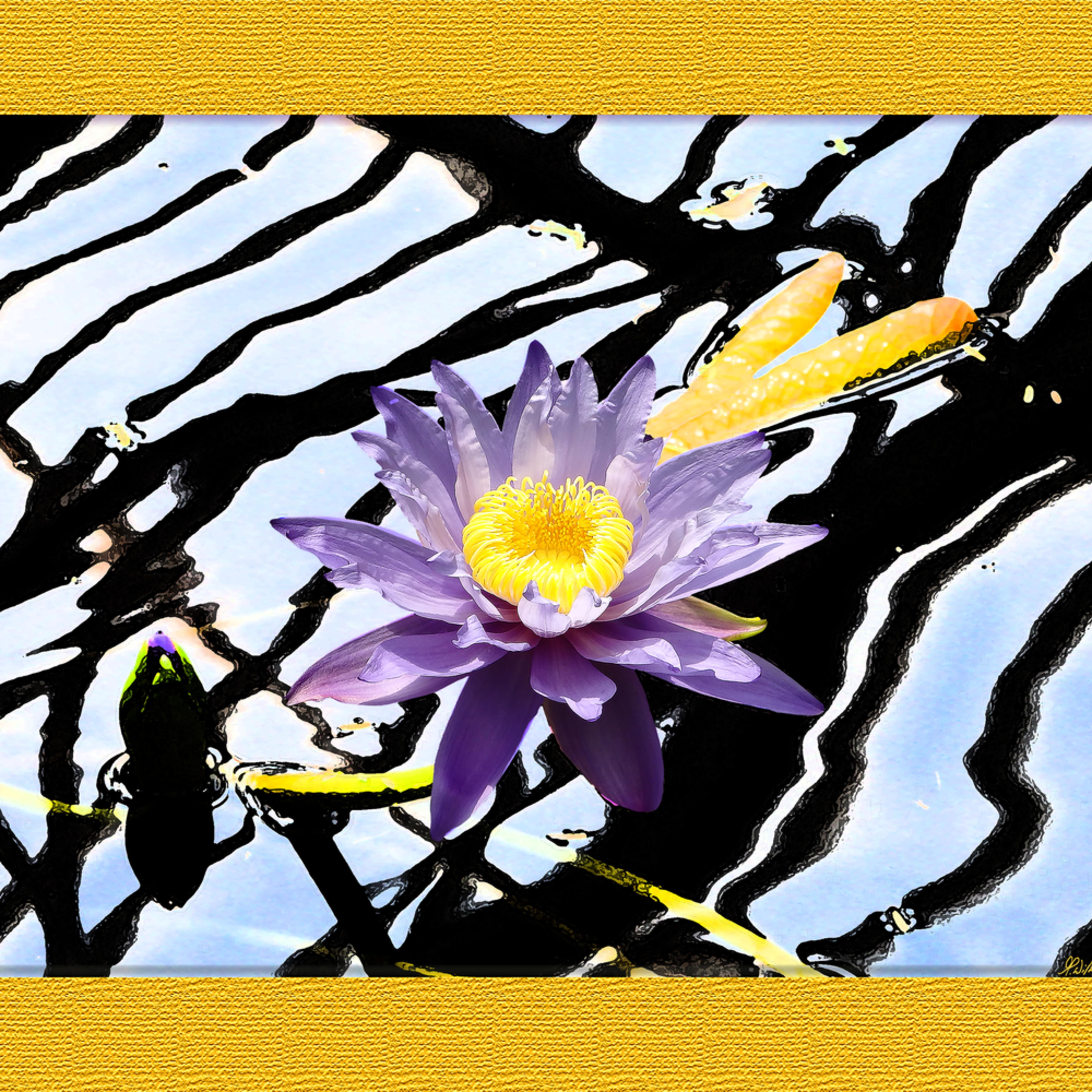 Purplewaterlily bhci51