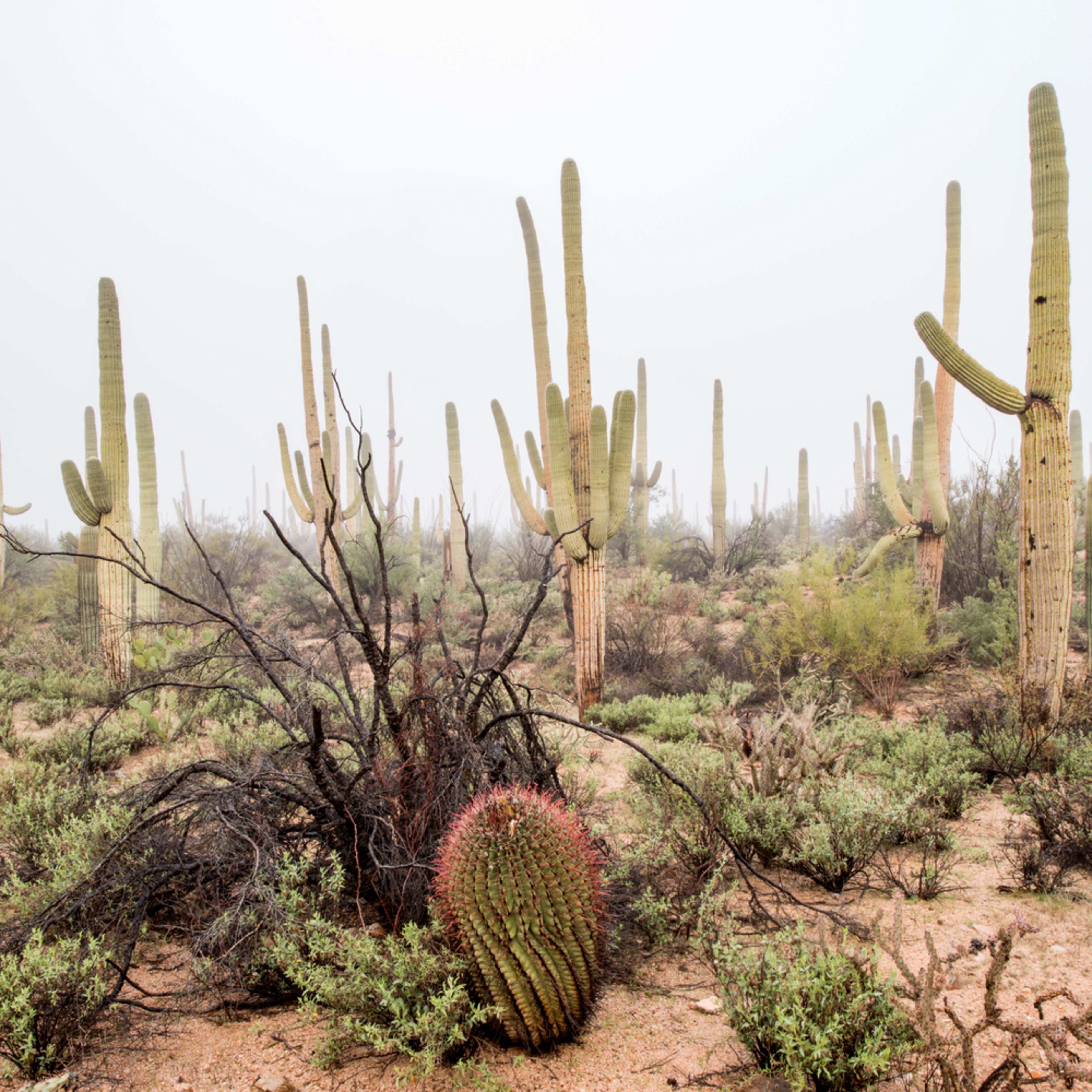 Dp435 saguaro n.p. fog h v7vfps