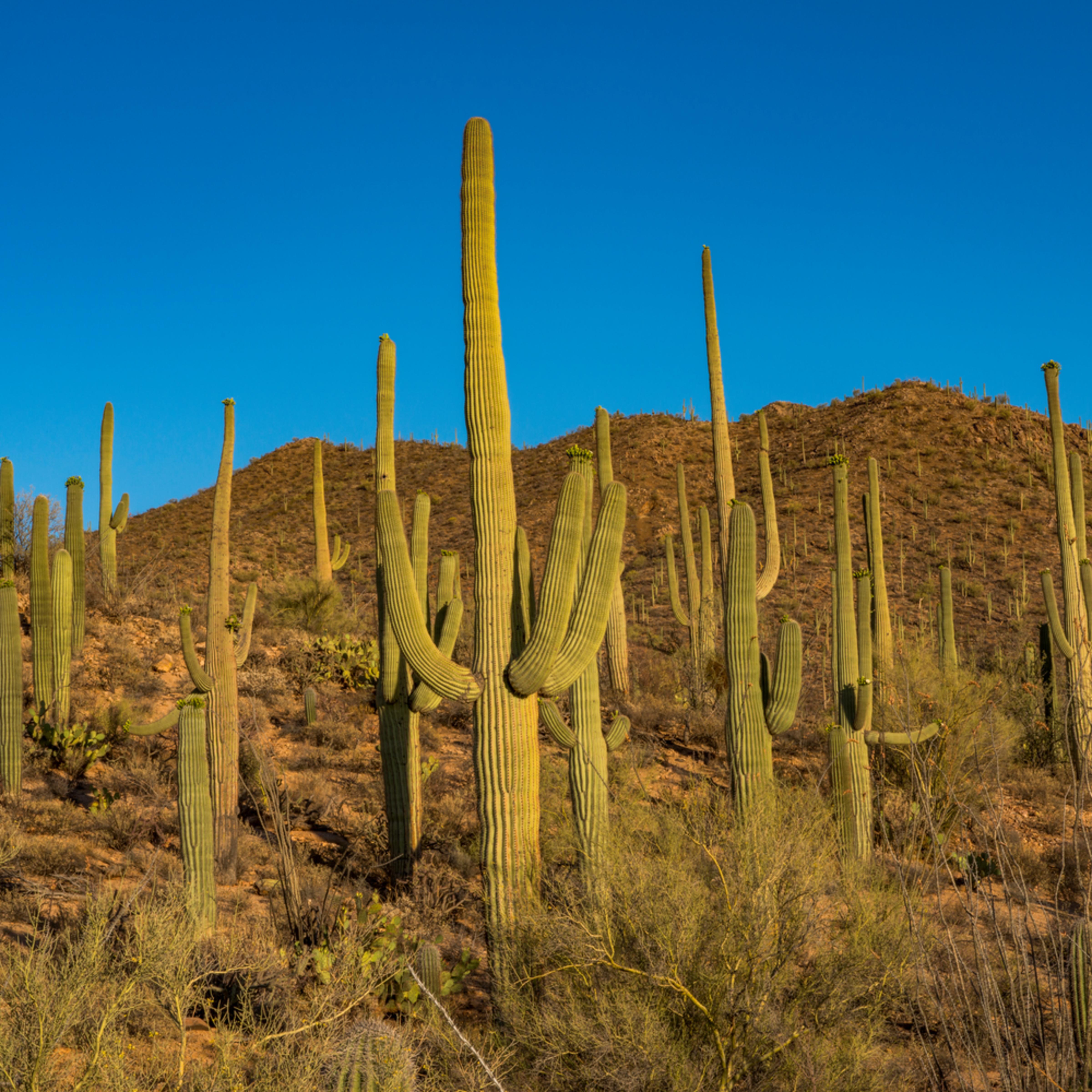 Dp508 saguaro west xaozev