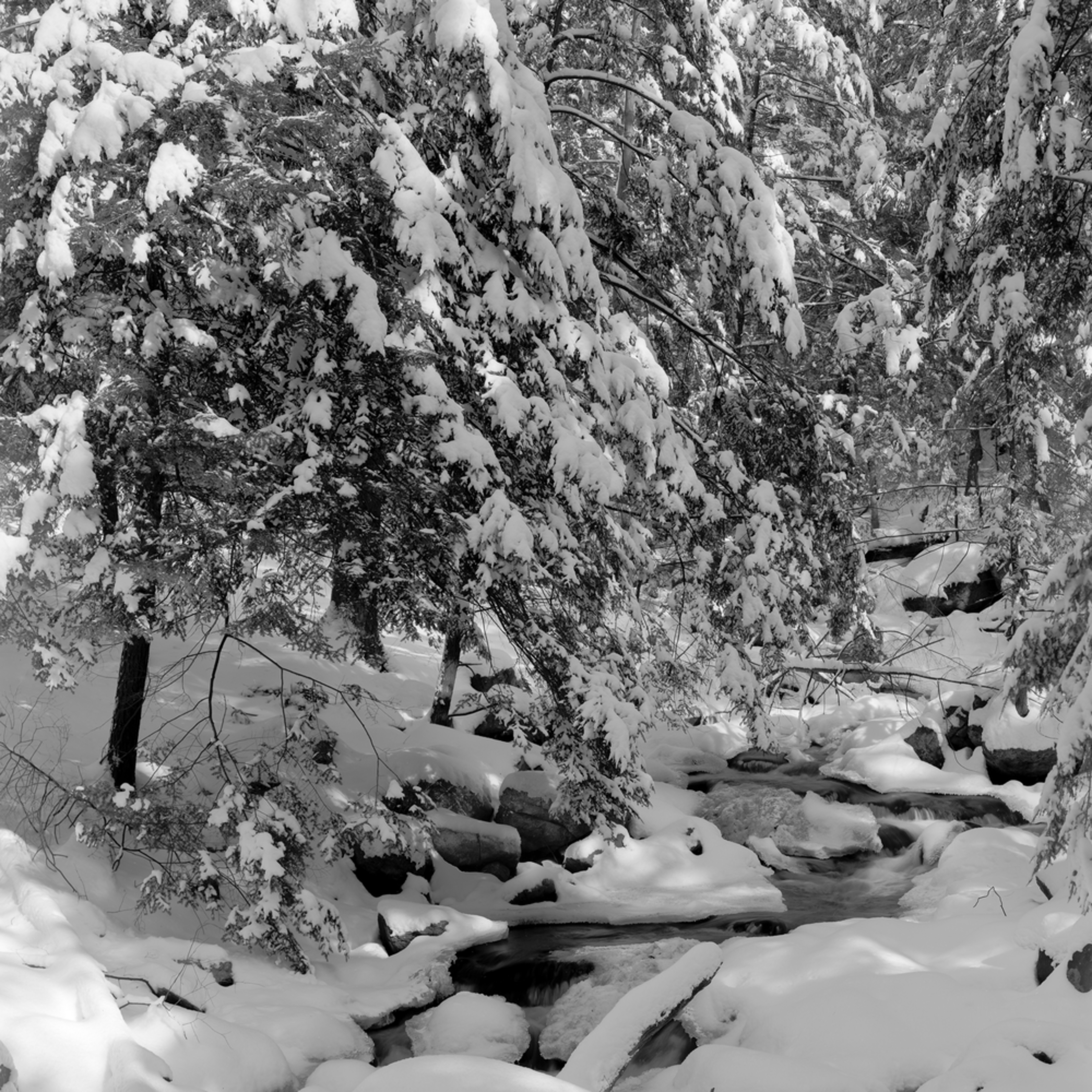 Winterwhitevalhala creek f59mme