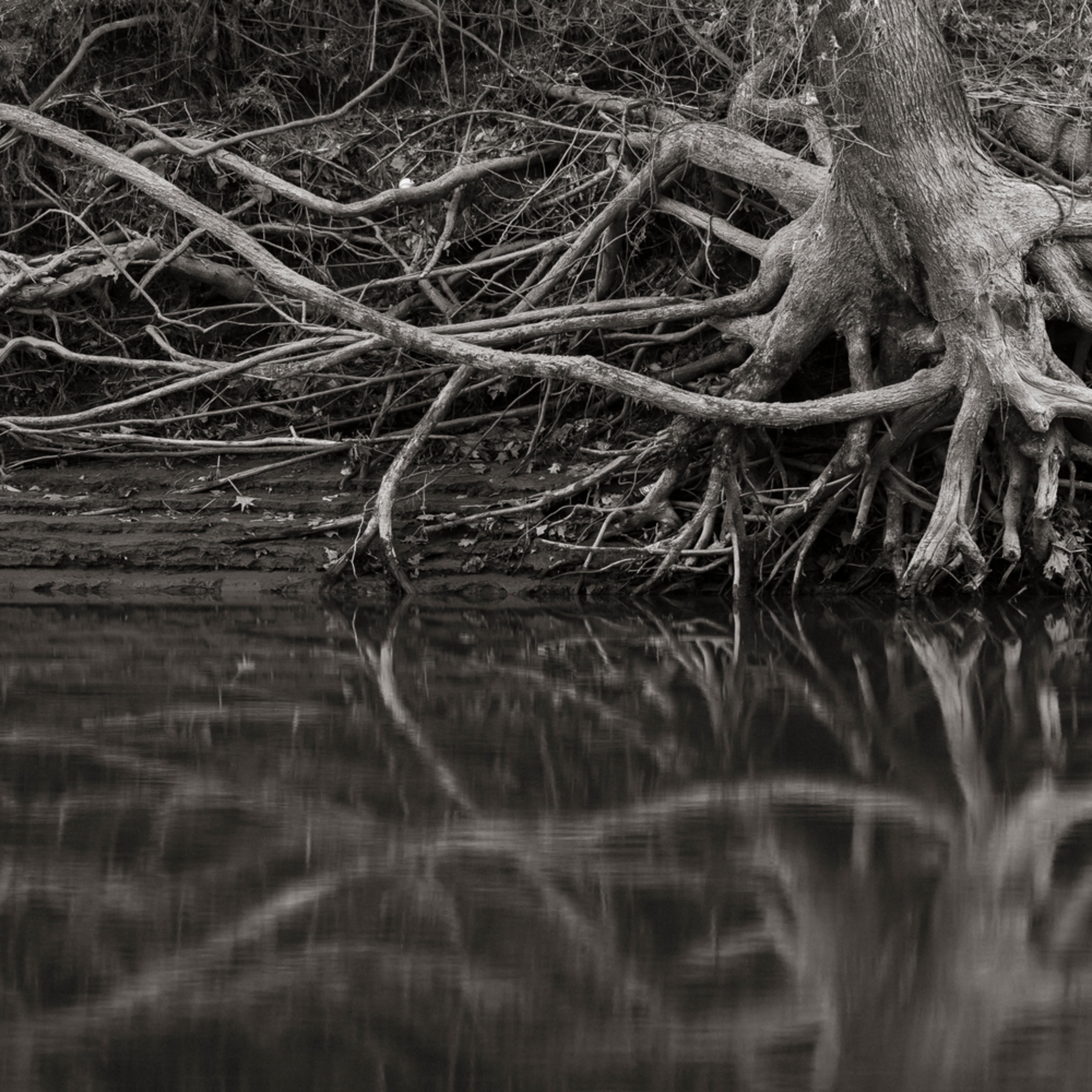 Roots luecyq