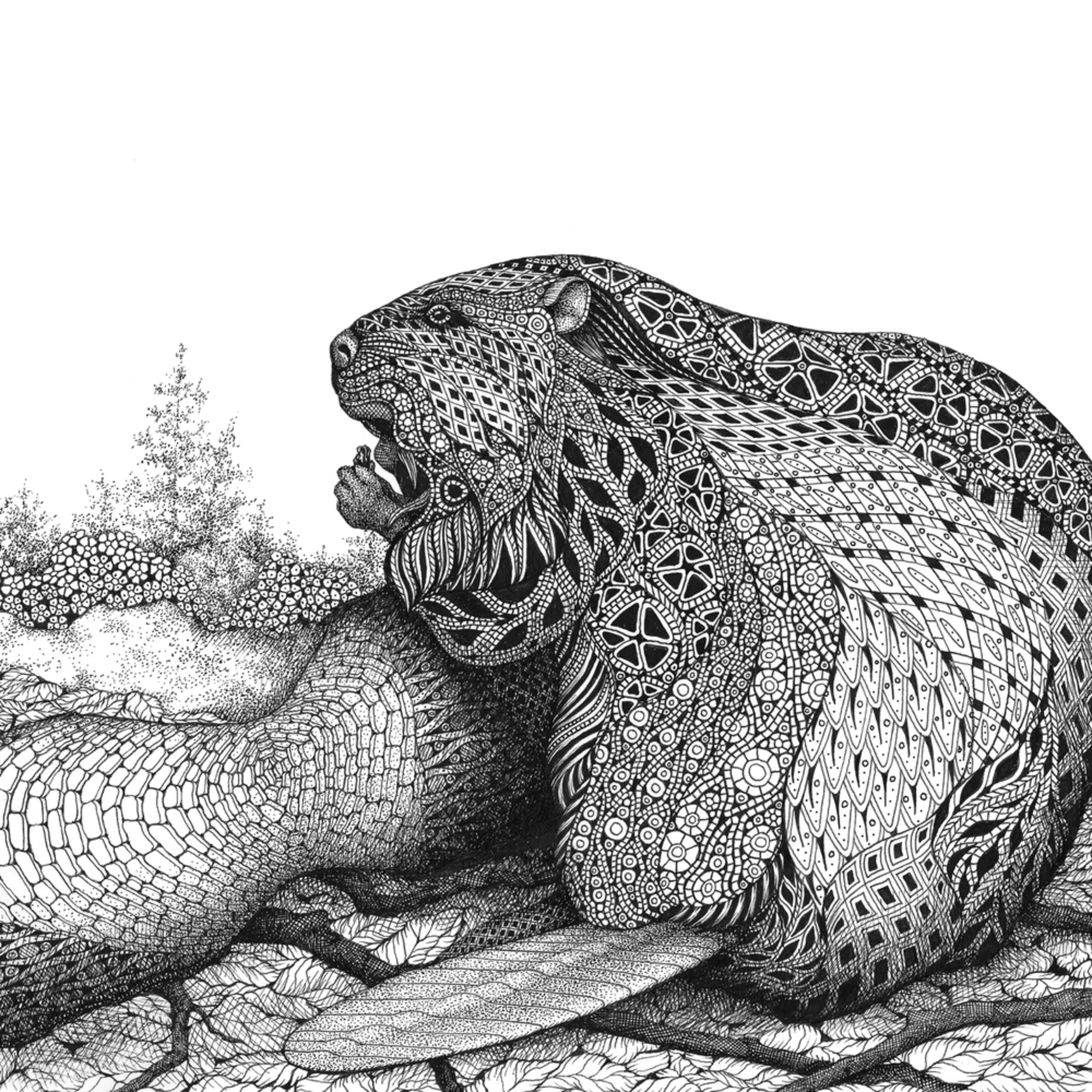 Beaver jjfeqx