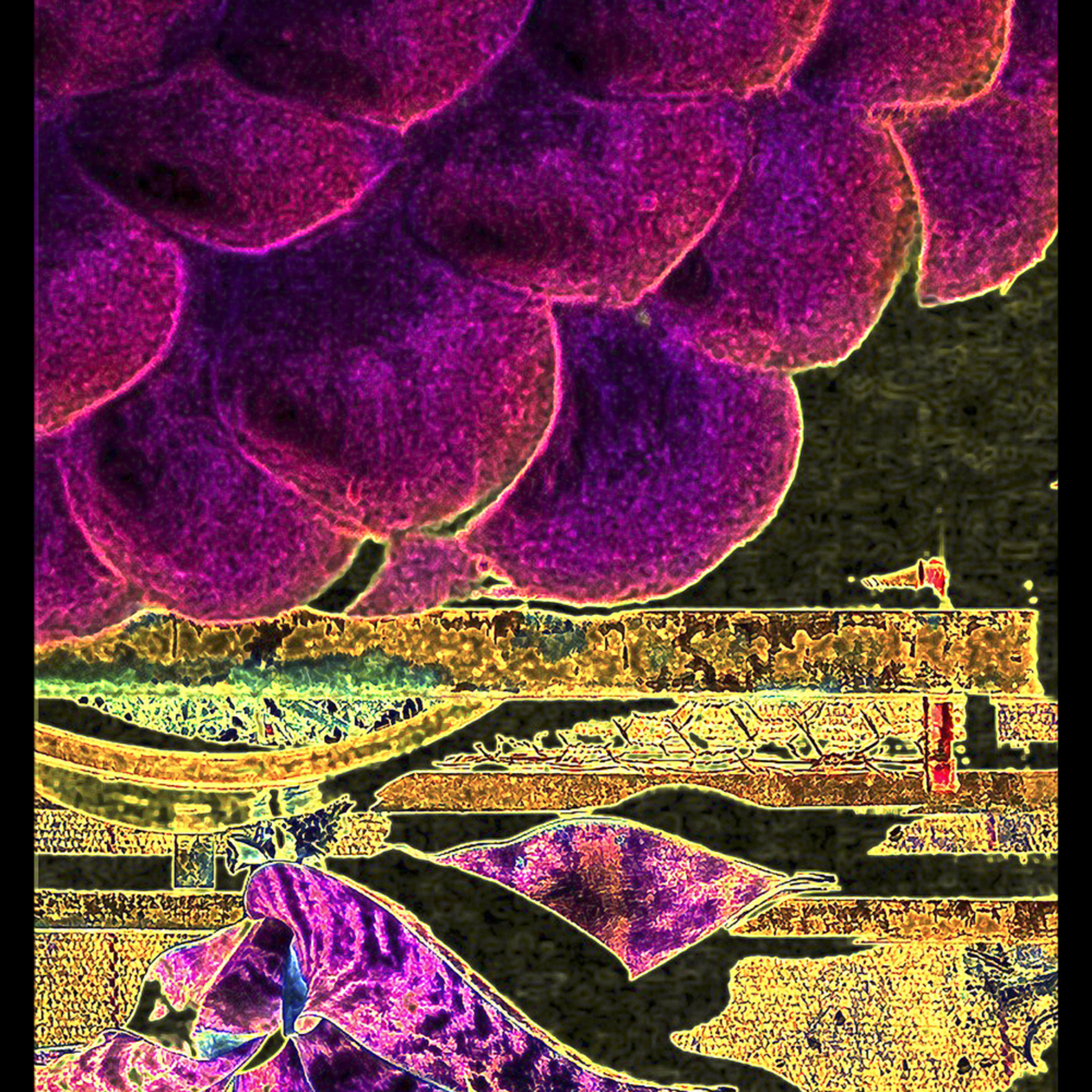 Grape fest asf2 txywa6