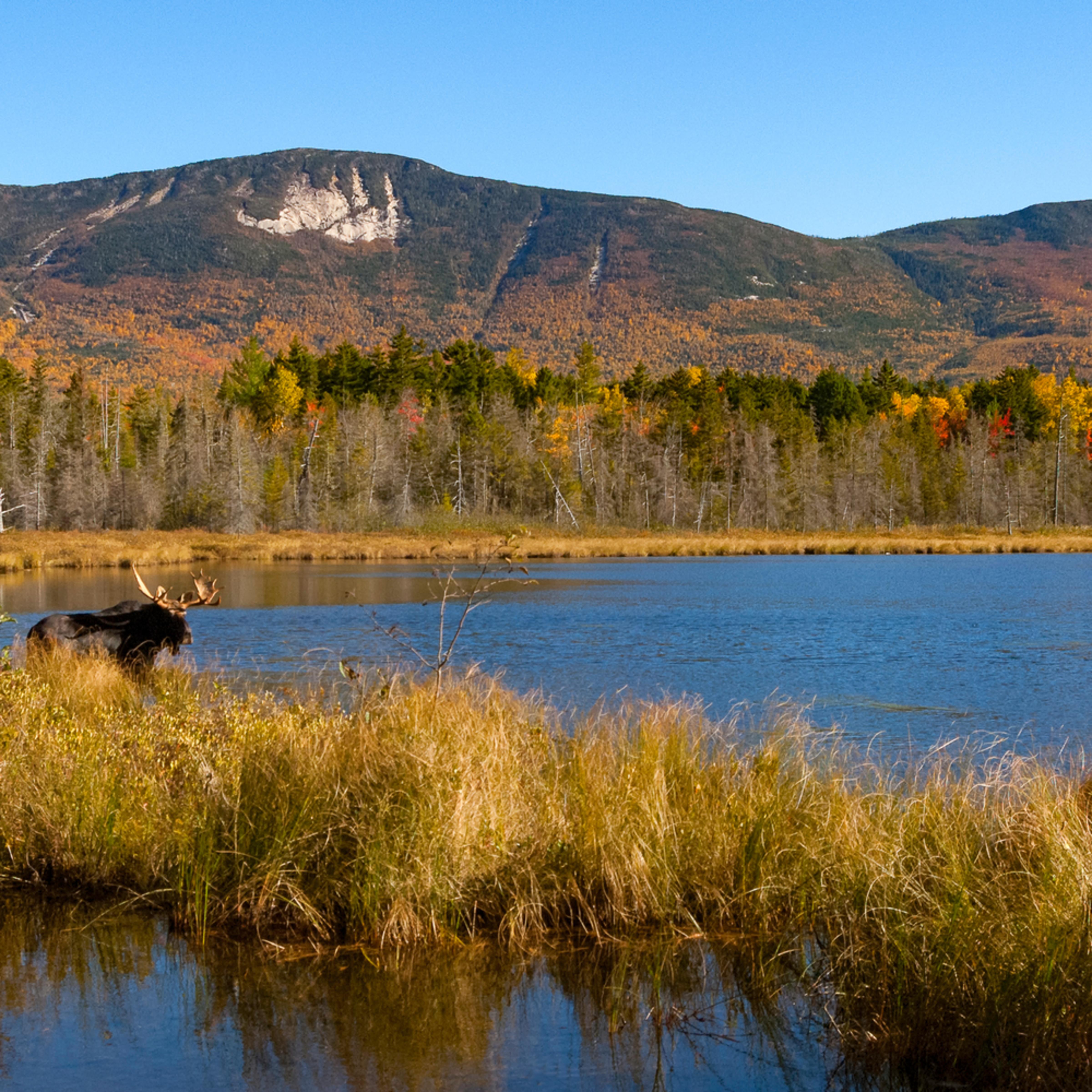 Bull moose and katahdin range from kidney pond d2mxoz