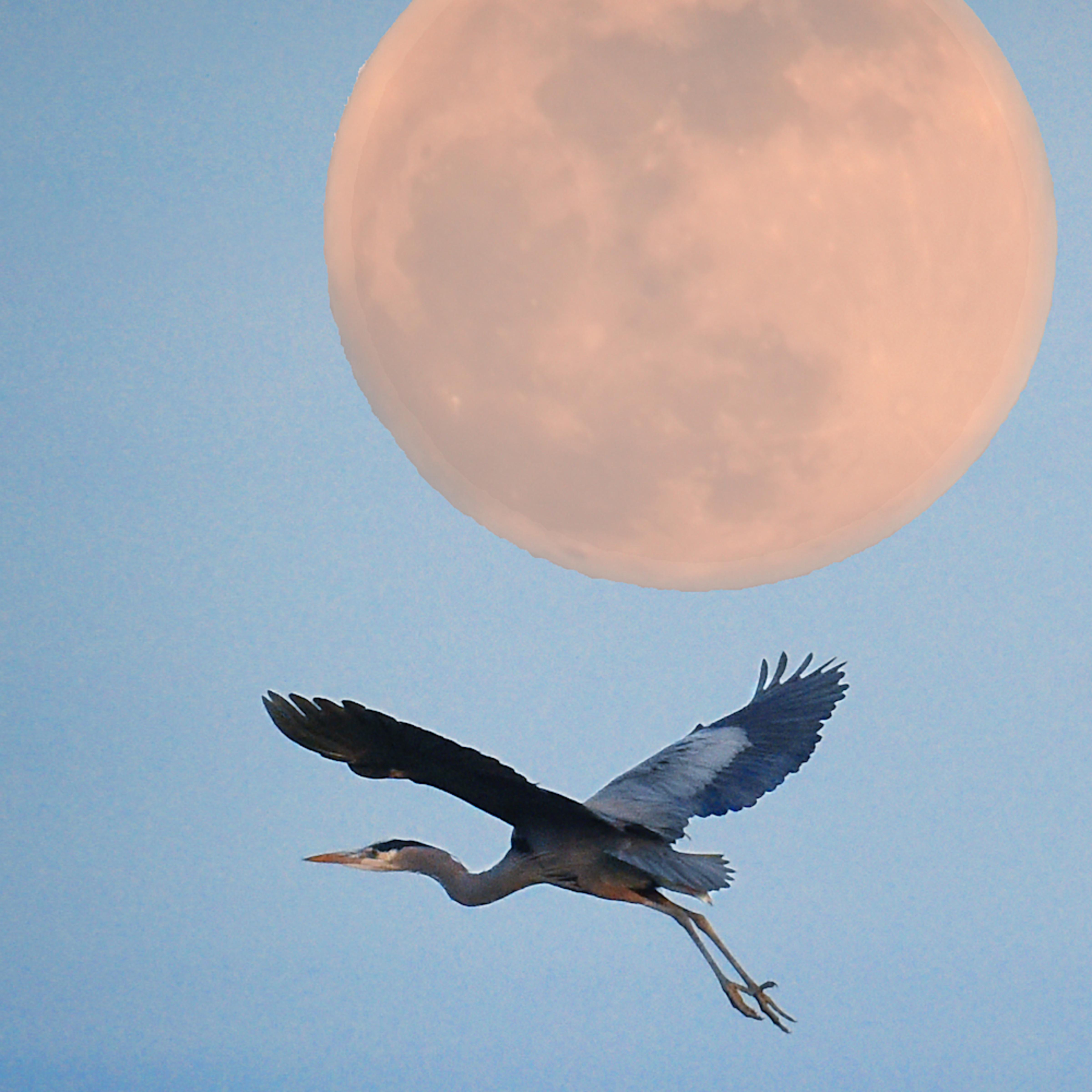 Rising moon heron si8ivv
