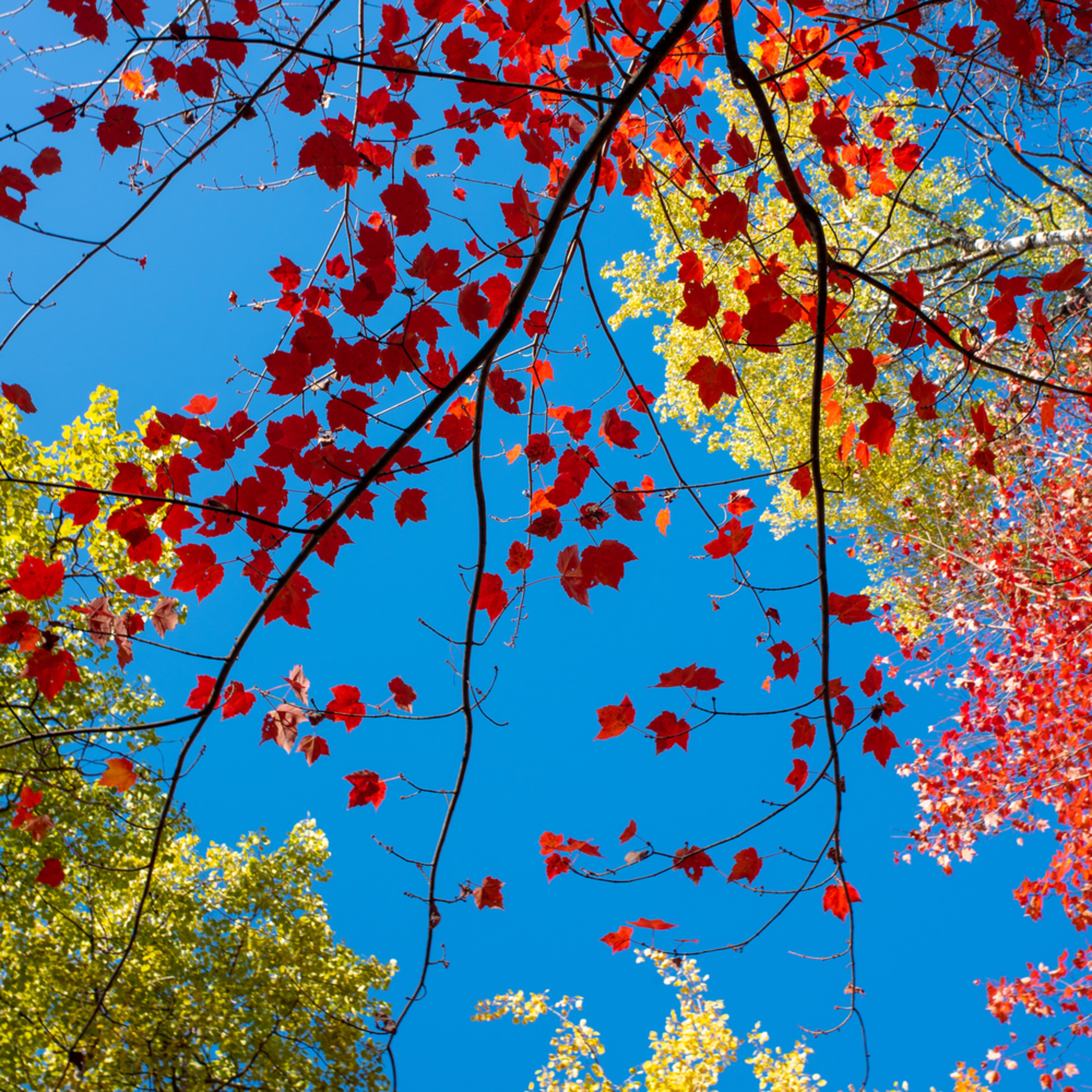 Fall kaleidoscope 1 uz6rx3