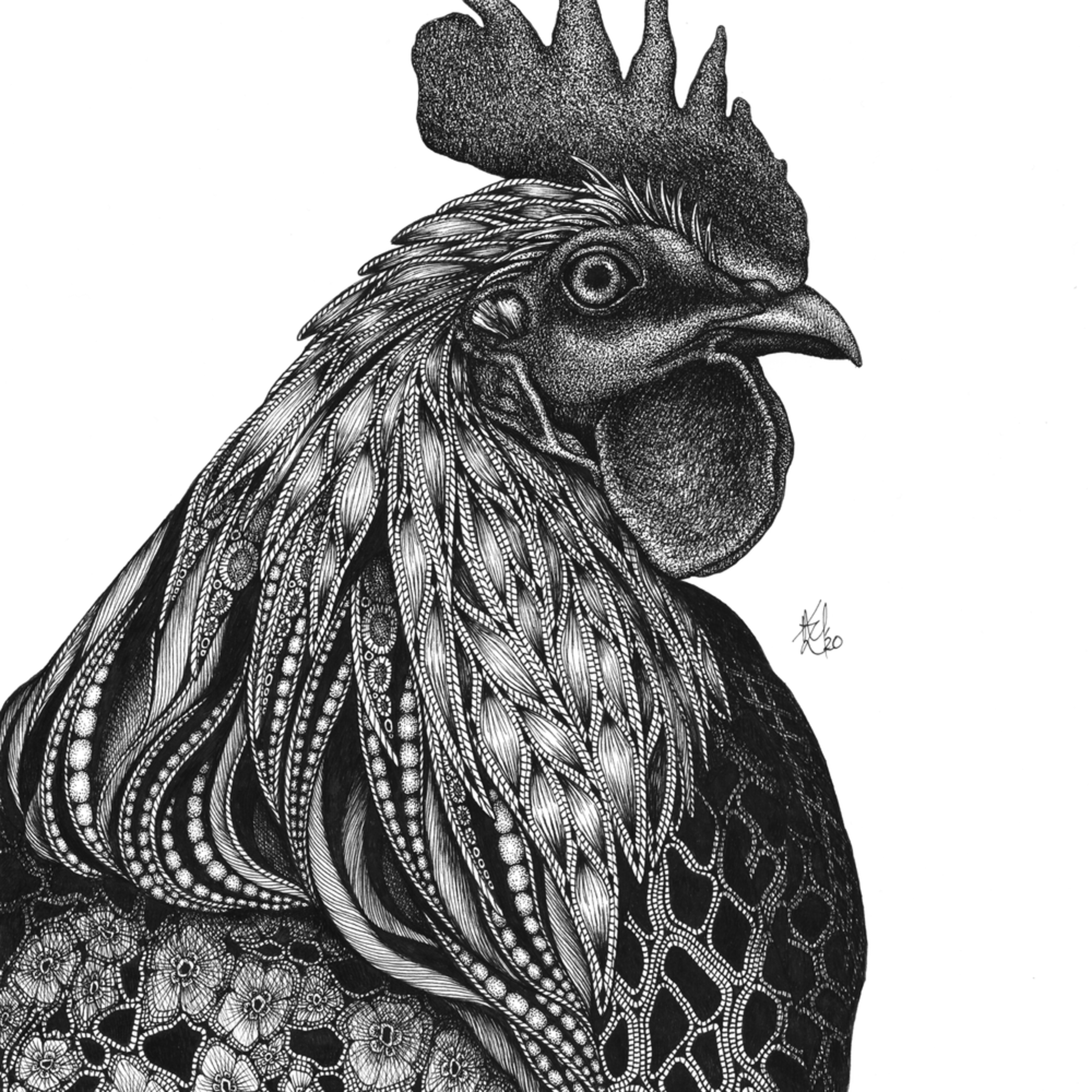 Rooster lccznz