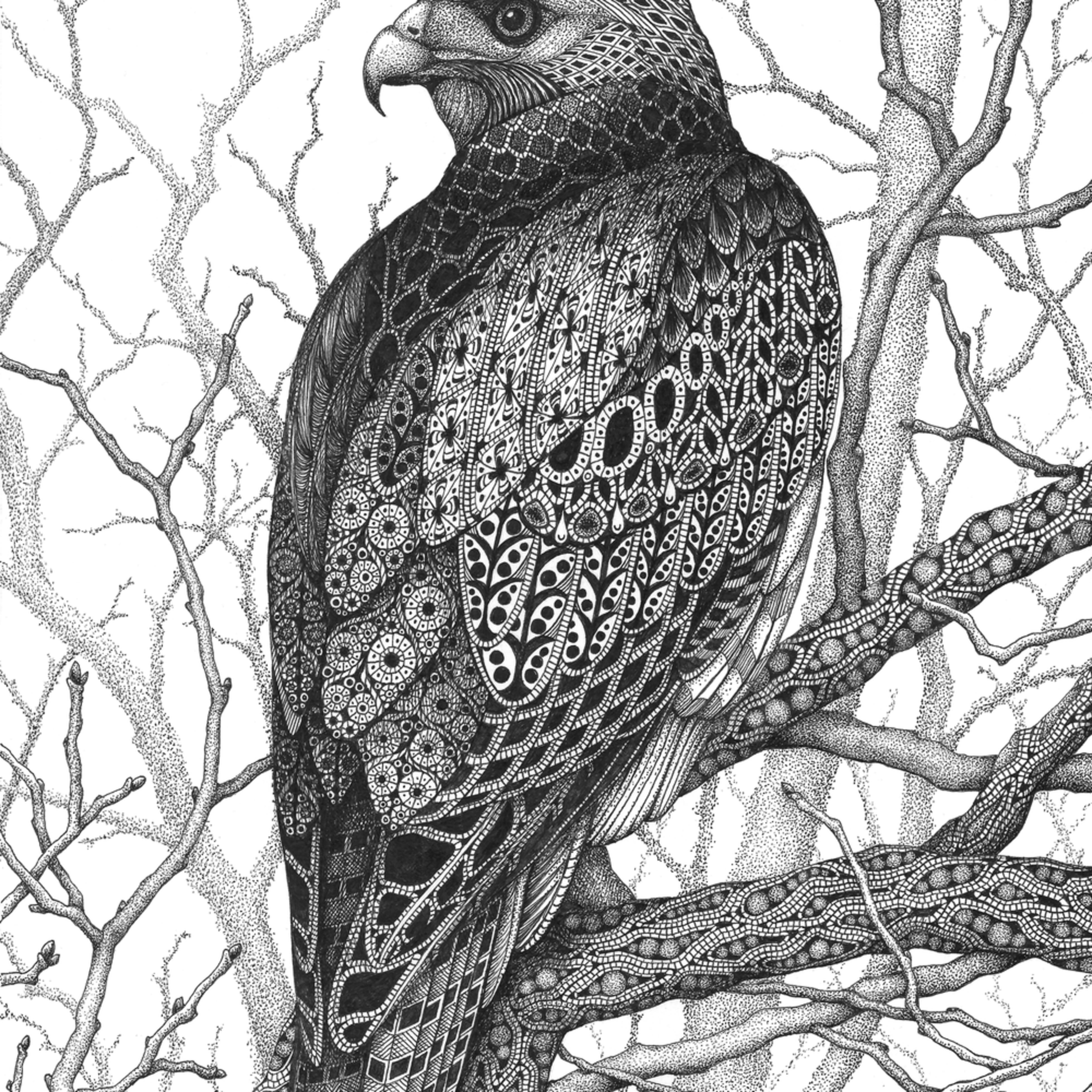 Watchful eye hawk nve45p