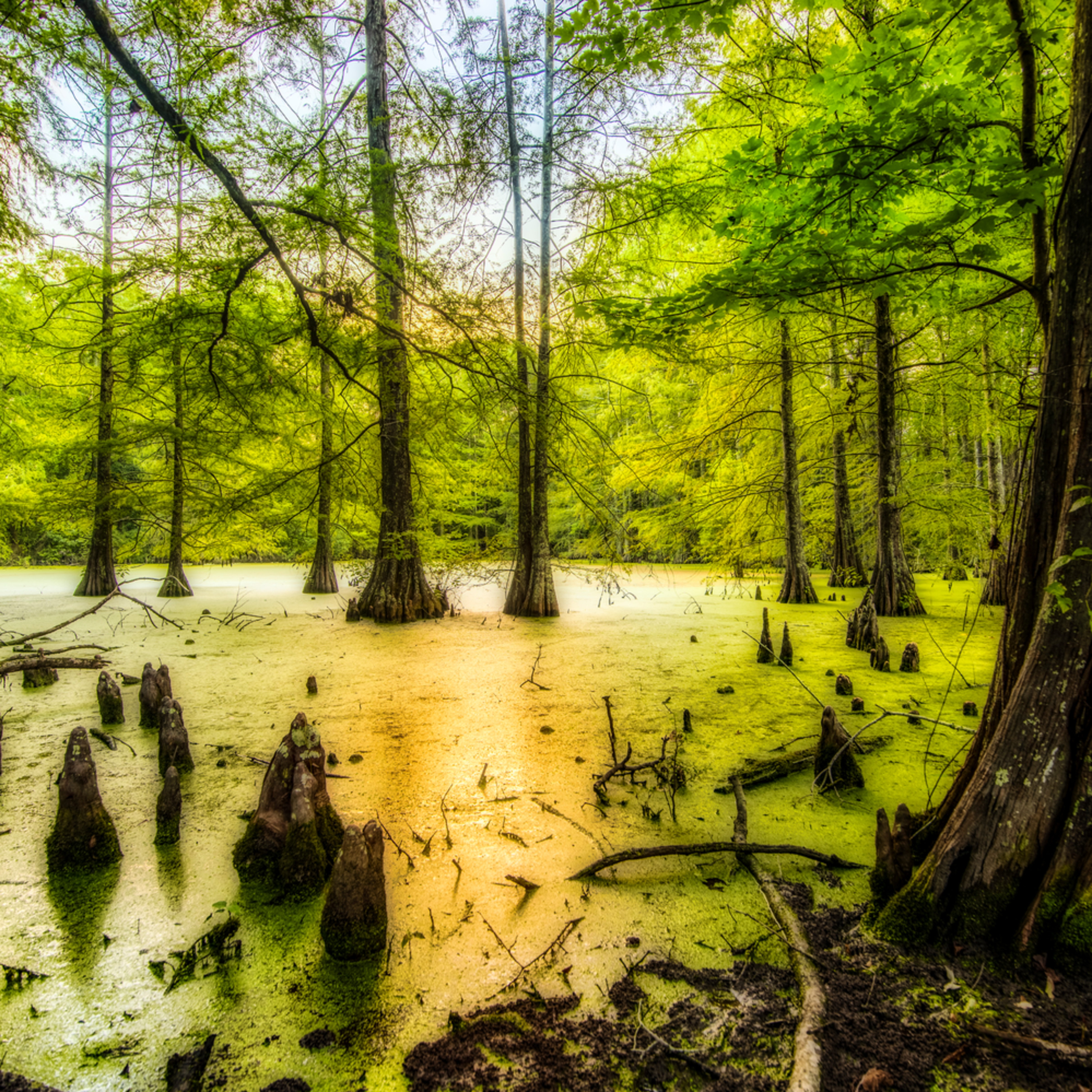 Andy crawford photography west feliciana swamp 20170823 1 r7fhm5