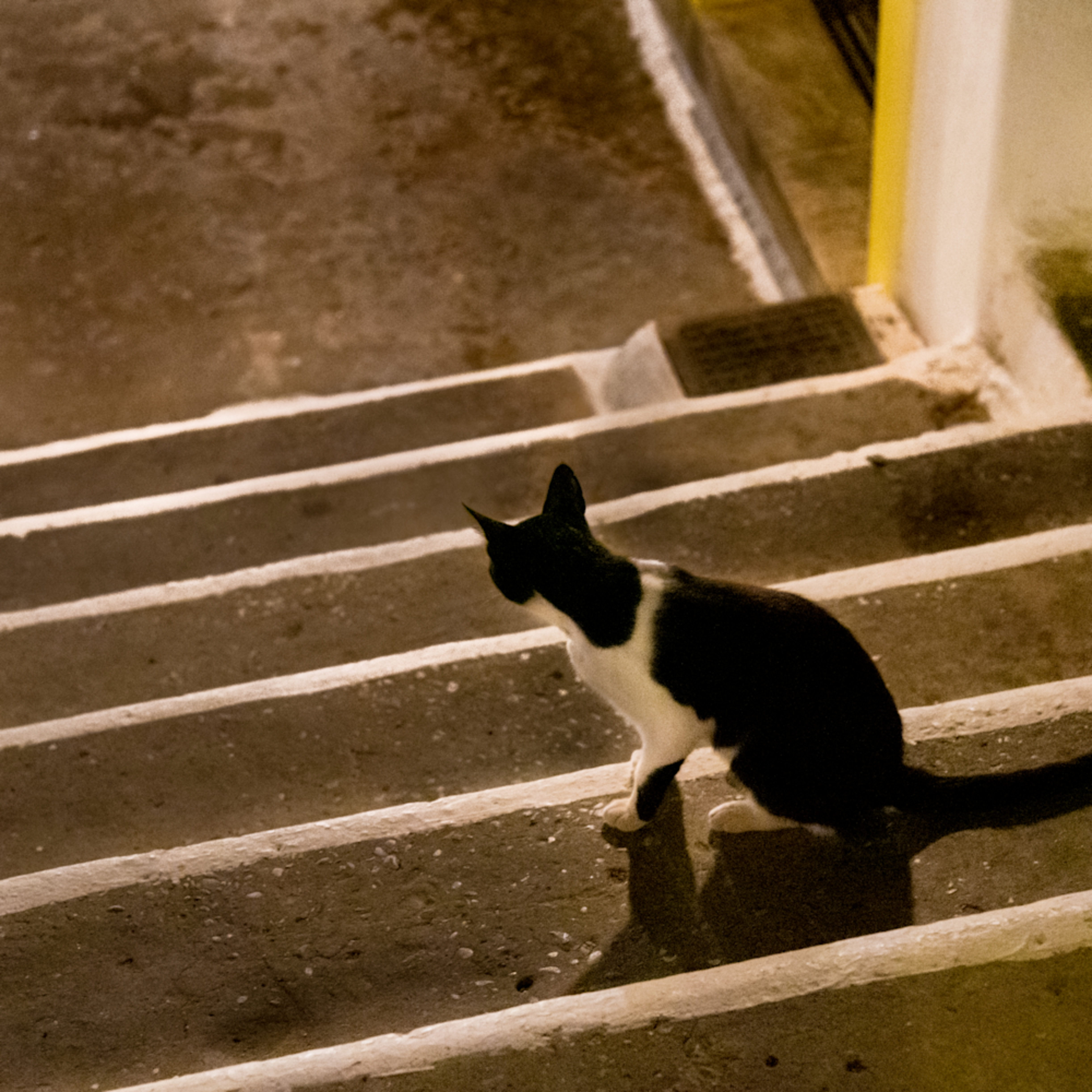 Black cat looking down the steps bap 0705 xpfojv