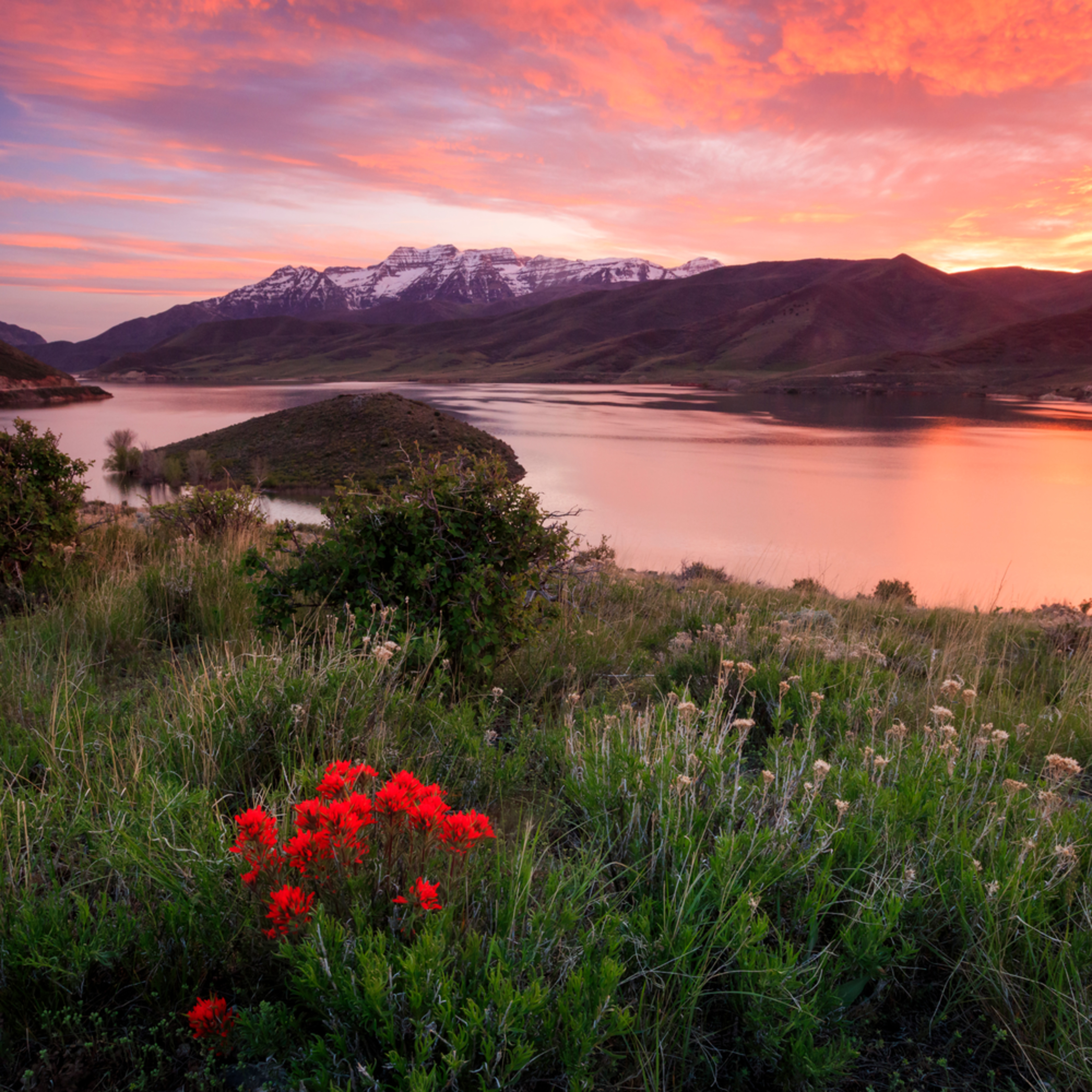 Fiery deer creek sunset with wildflowers flvwna