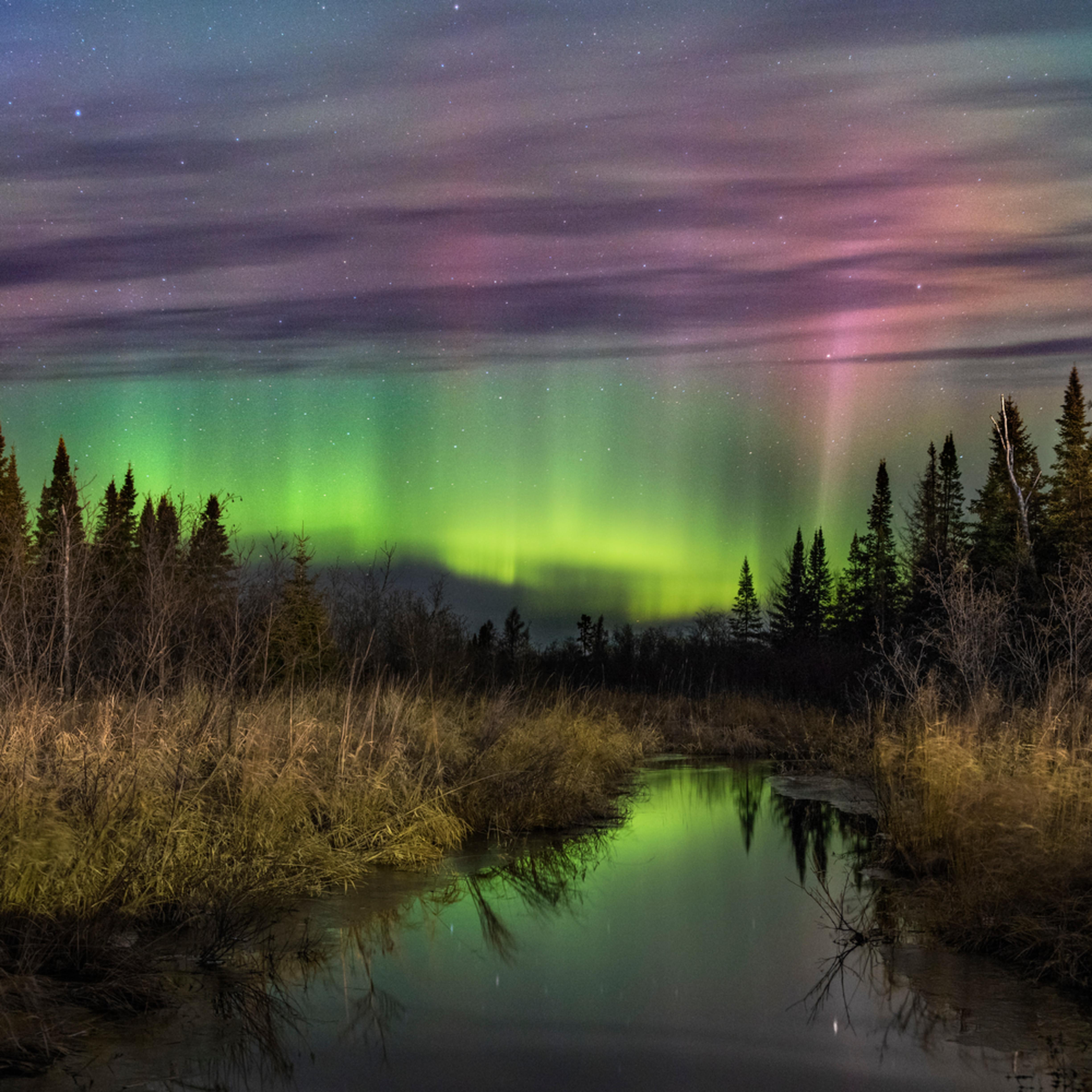 Shamrock aurora qm5fv4