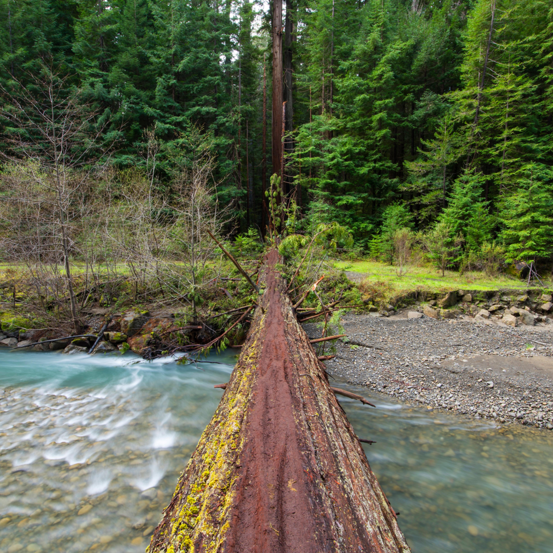 Tree bridge humboldt redwoods jldegc