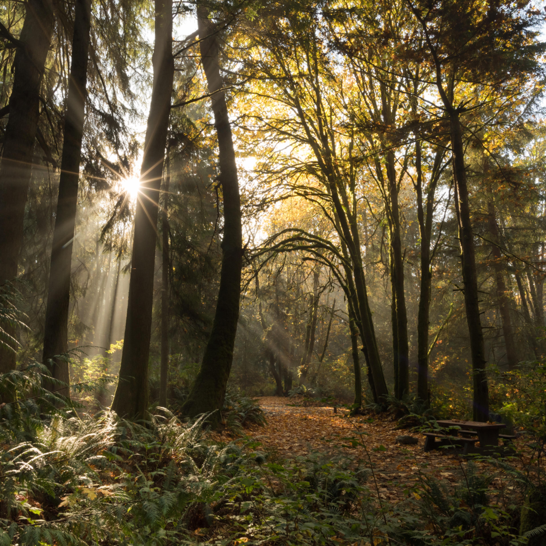 Autumn glow m9ffta