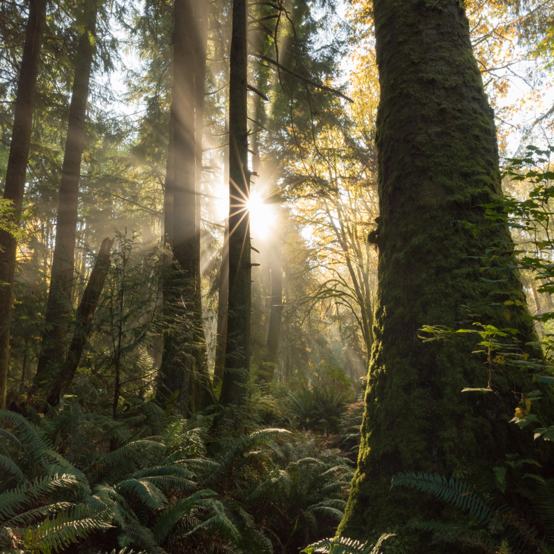 Forest radiance dizfku