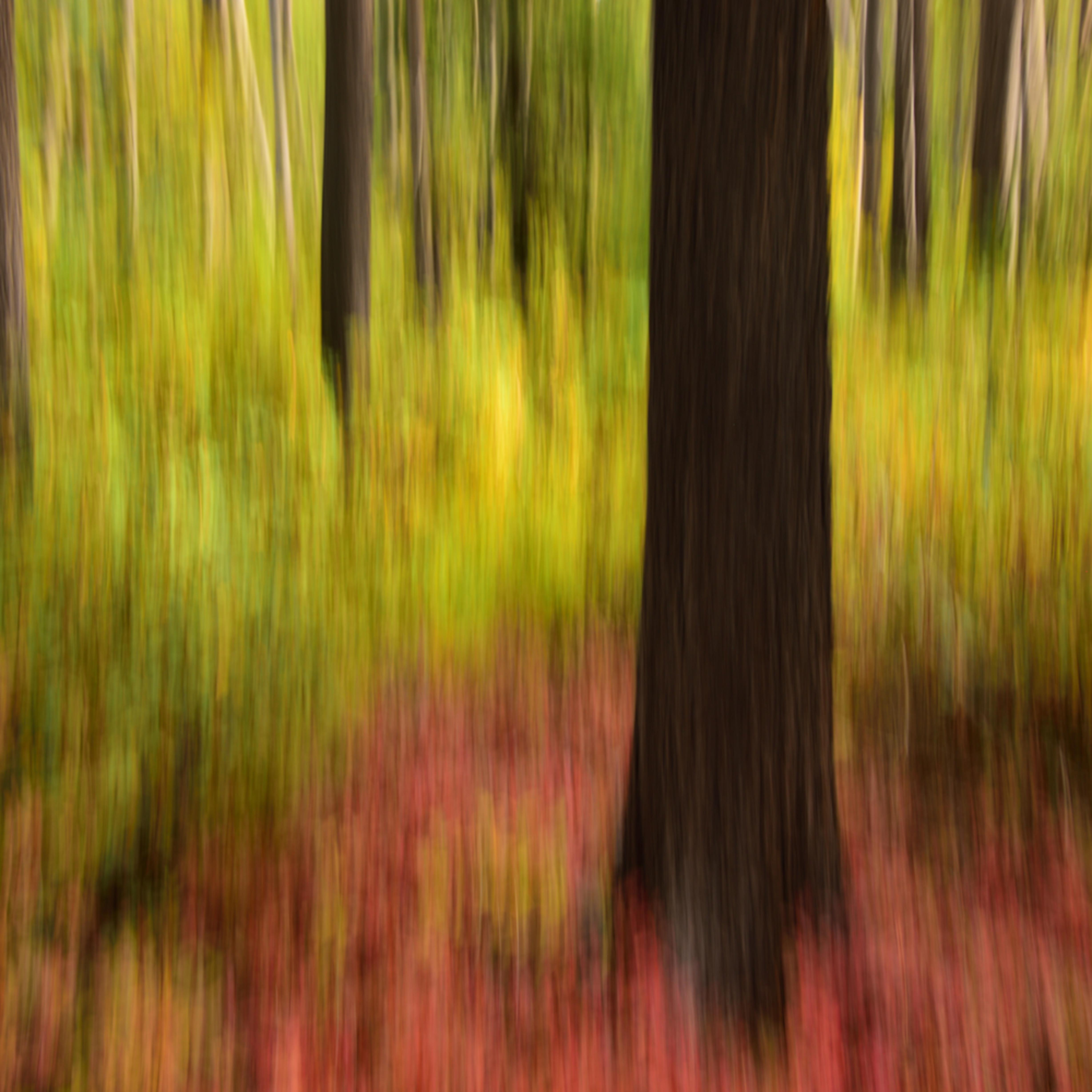 Refish lake.autumn quickens.motion blur asf rnk9yl