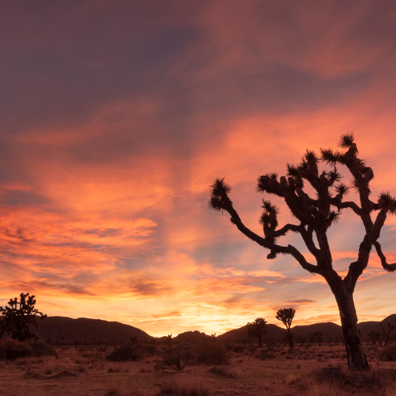 Desert evening jlboha