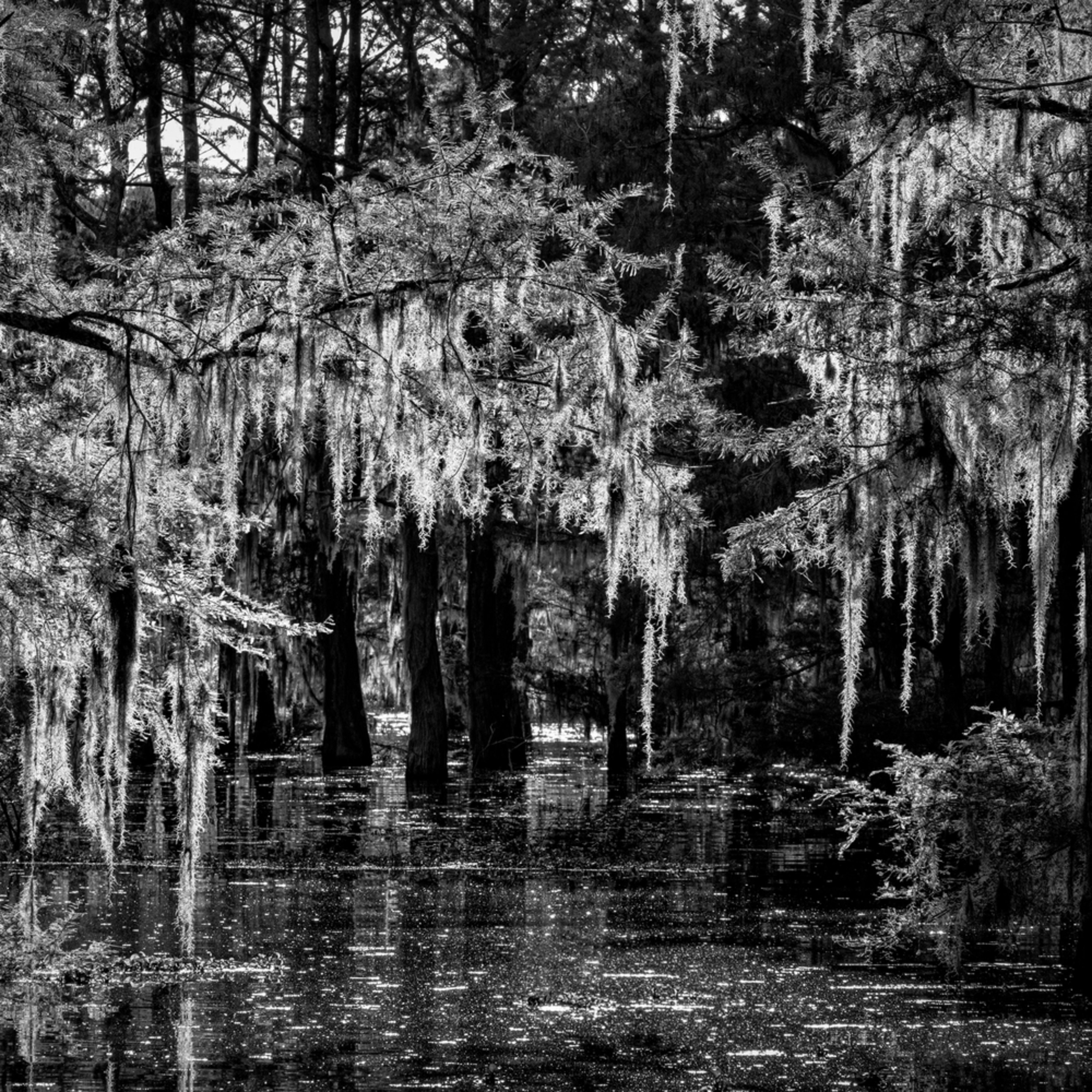 Andy crawford photography into the garden of light and darkness henderson swamp g9itbn