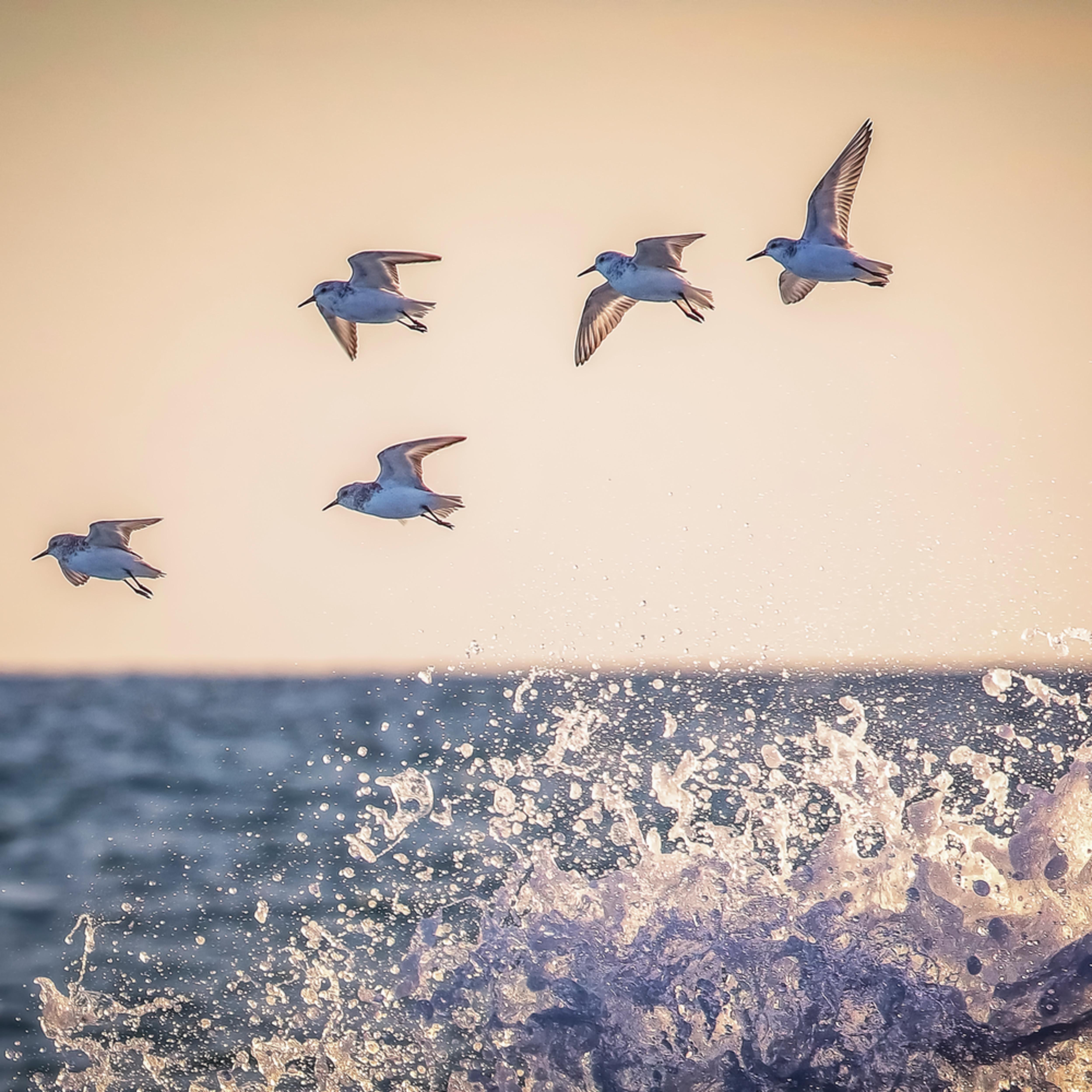 Lucy vincent sanderling wave 1 tjbthn